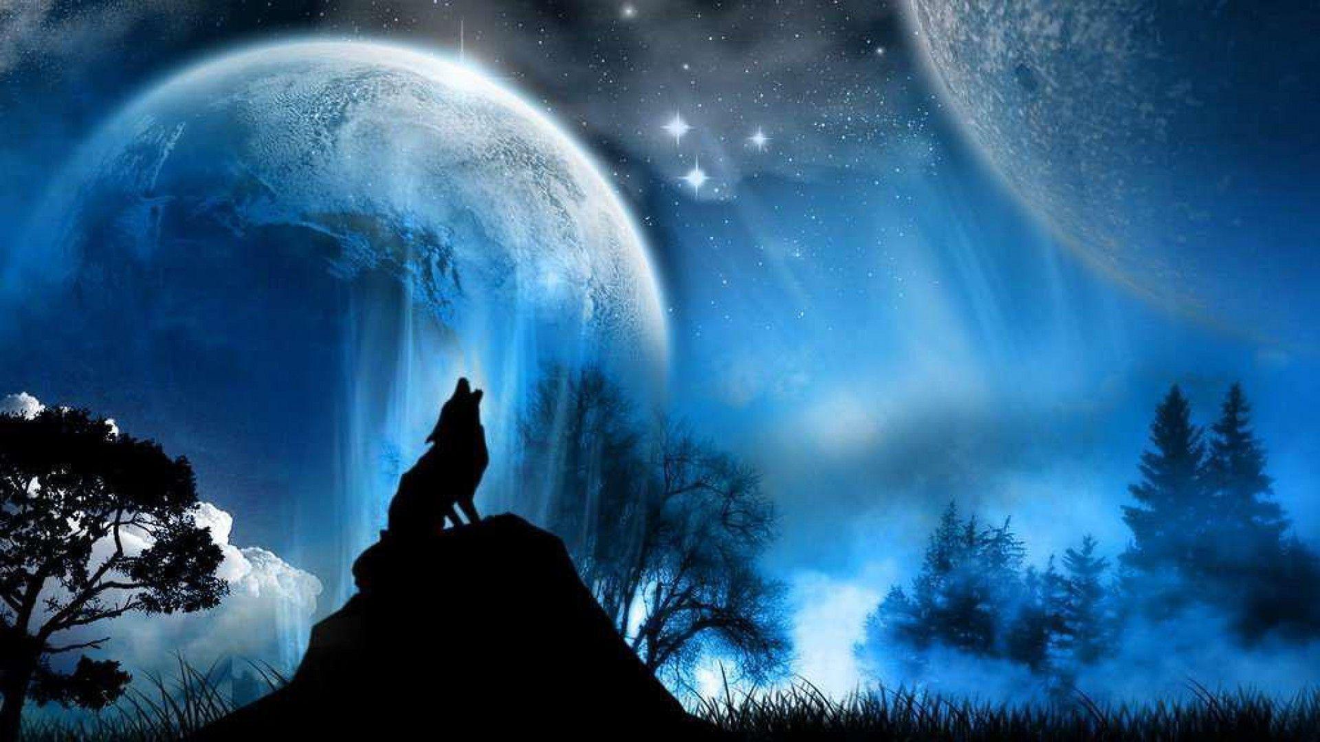 Wolf Wallpaper Hd 1080p Desktop #1223 Wallpaper | walldesktophd.