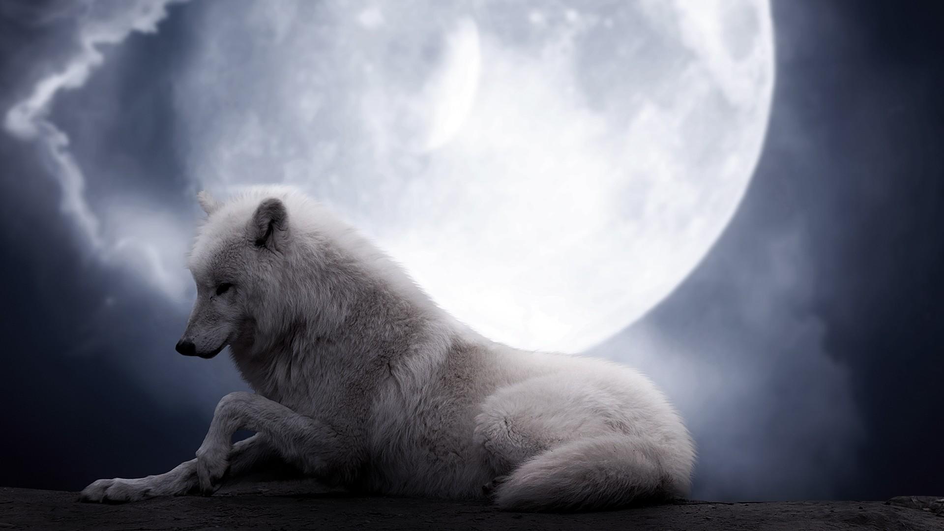 Preview wallpaper wolf, moon, lie, predator 1920×1080