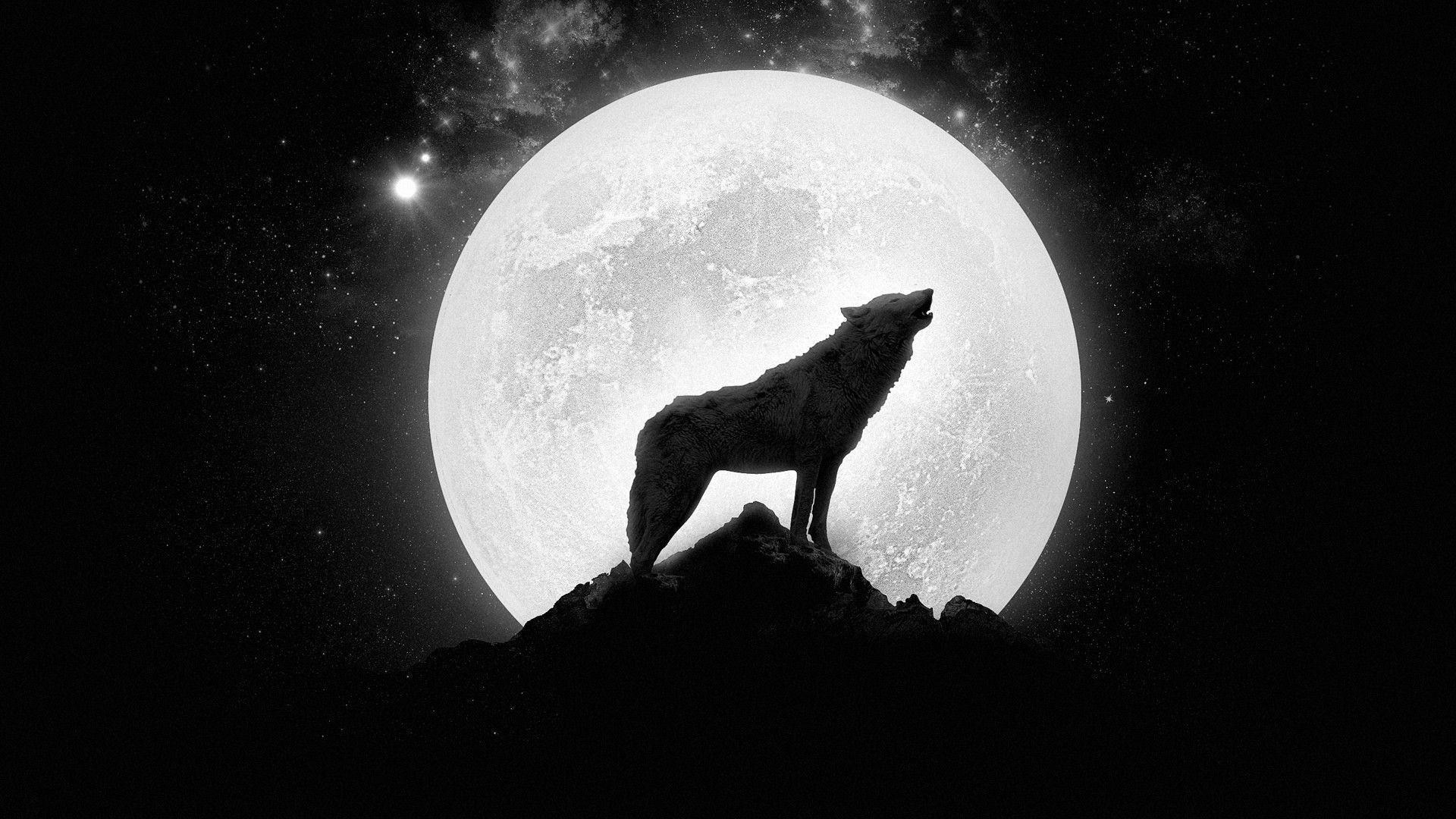 Howling Wolf Wallpaper Hd Resolution