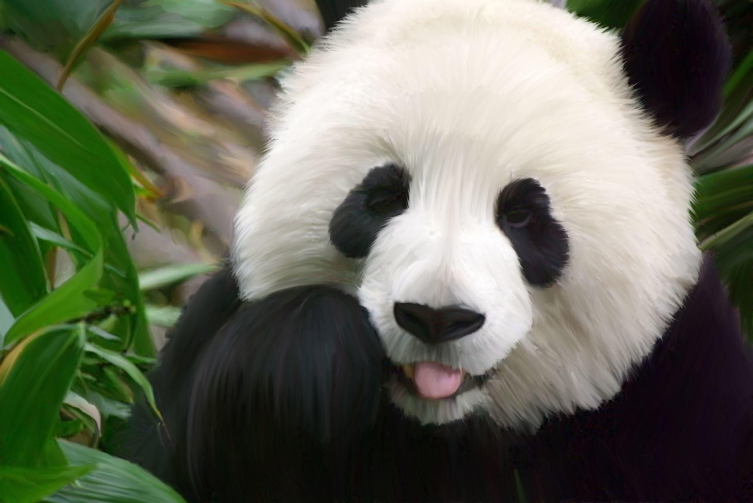 … Phone wallpaper: Adorable panda …