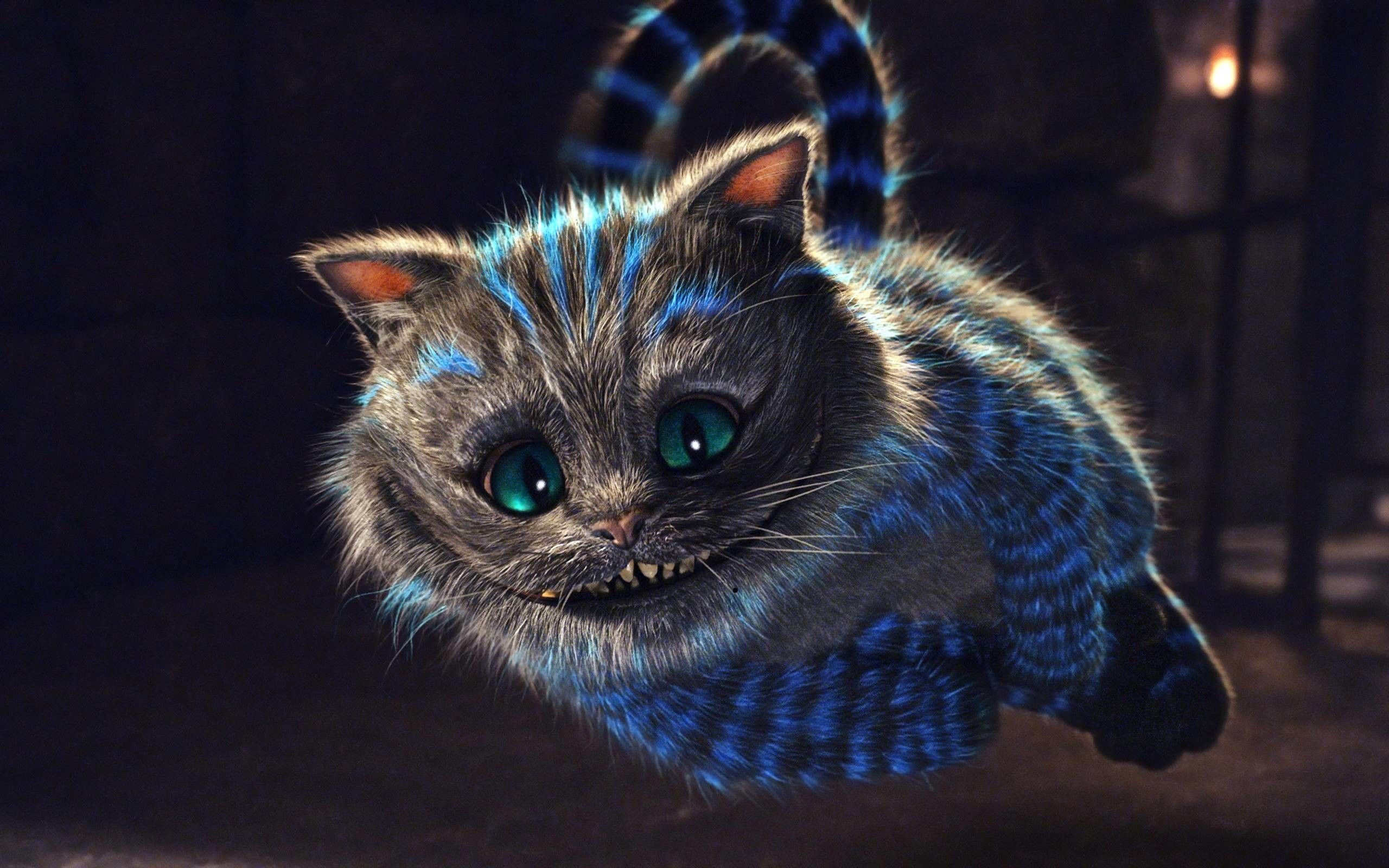 Funny Cartoon Cat Wallpaper For Android #5422 Wallpaper | High .