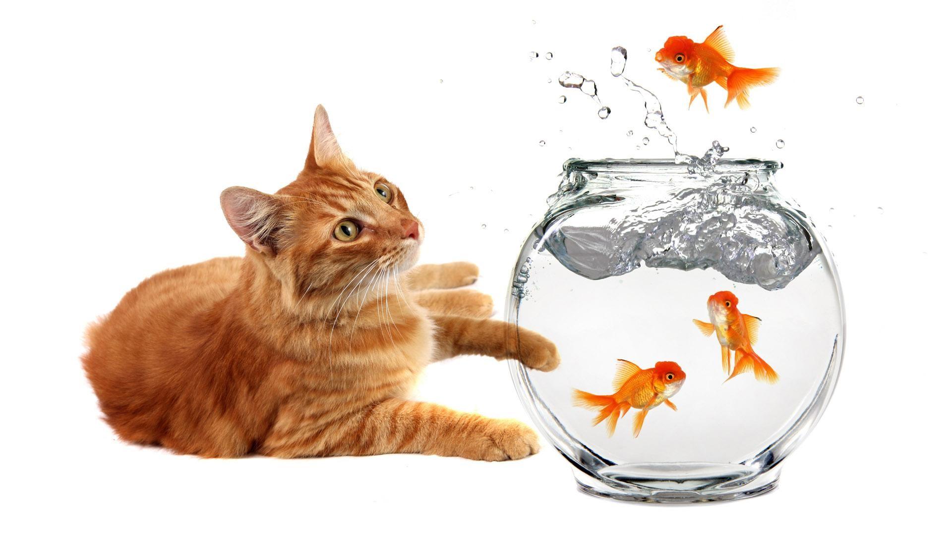 Funny Cartoon Cat 12 Widescreen Wallpaper