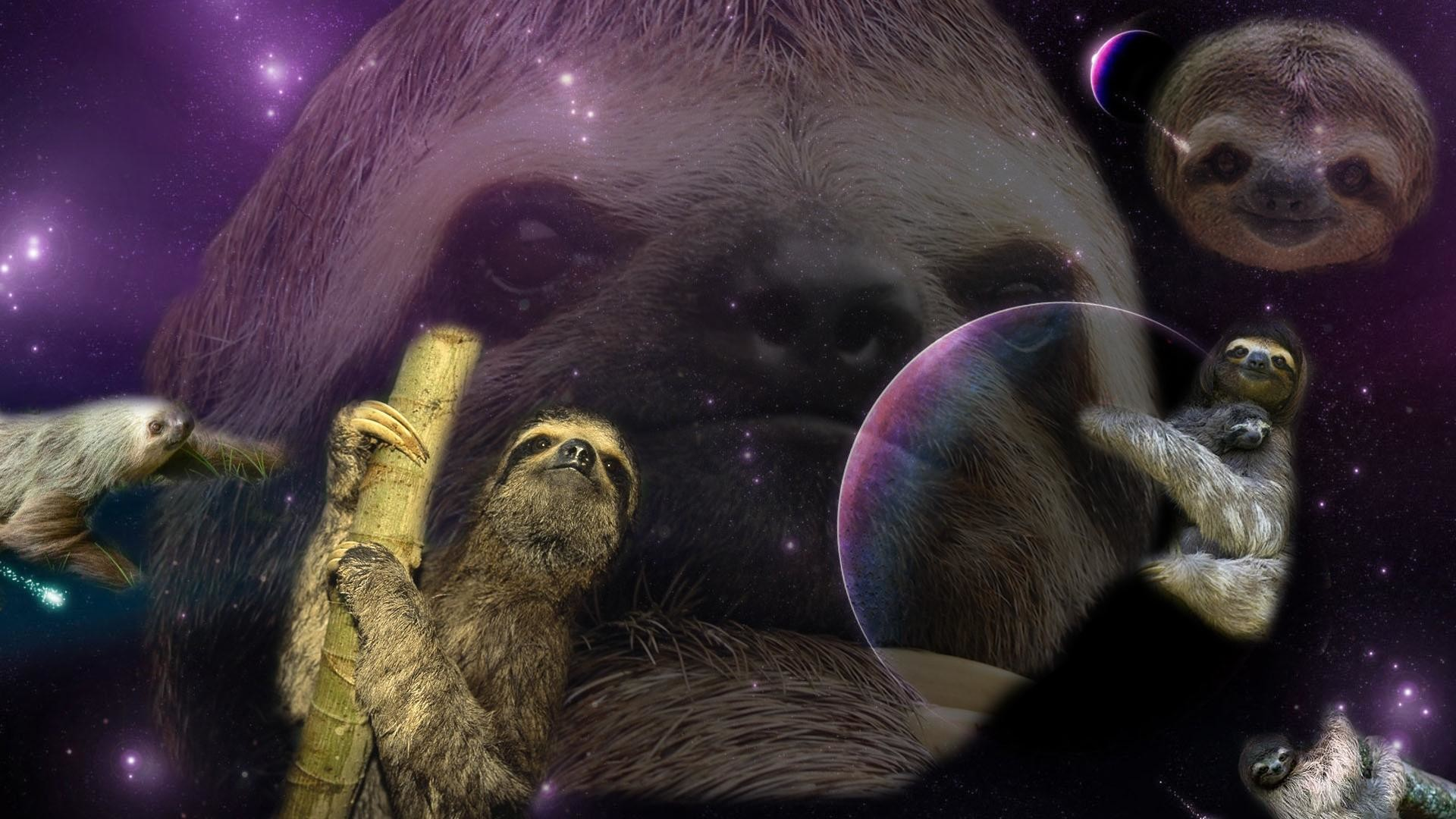 in class and created a sloth wallpaper. I'm currently adding one sloth .