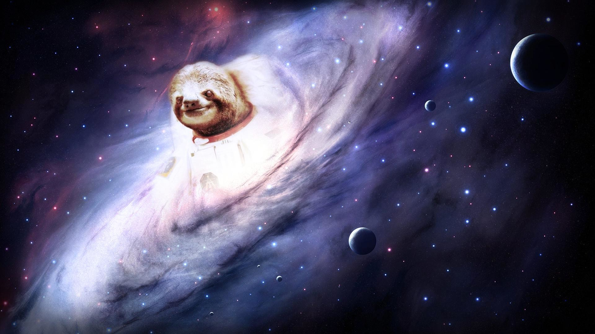 Sloth Wallpapers – Wallpaper Cave