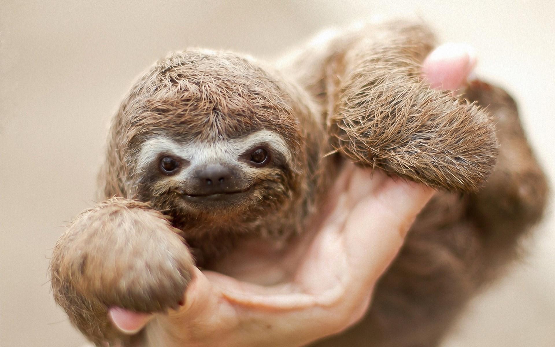 Sloth · sloth wallpaper download free