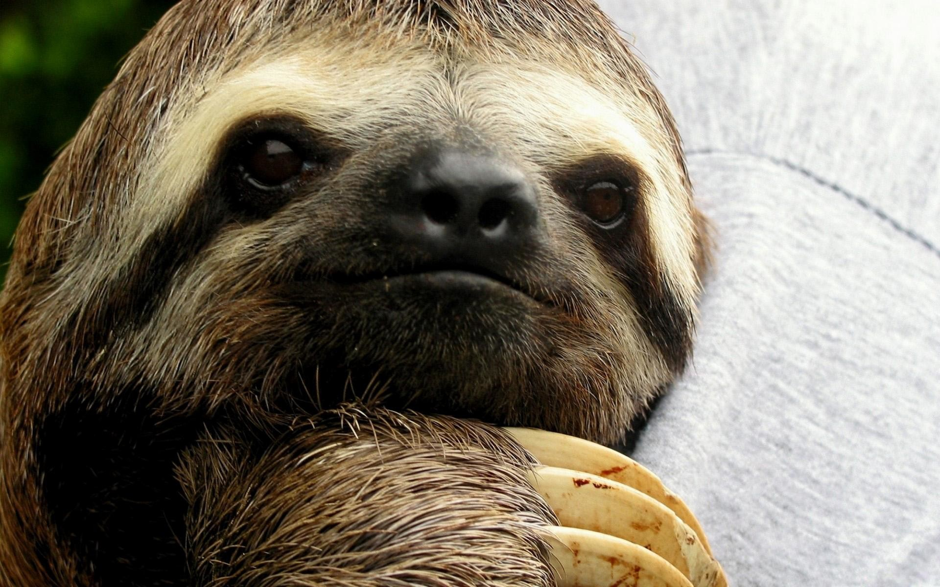 Sloth-Image