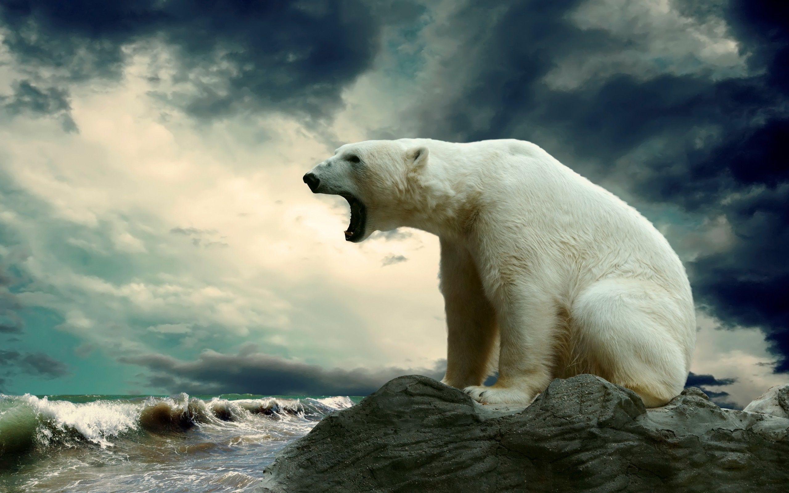 Kodiak Bear Wallpaper Bears Animals Wallpapers HD Wallpapers