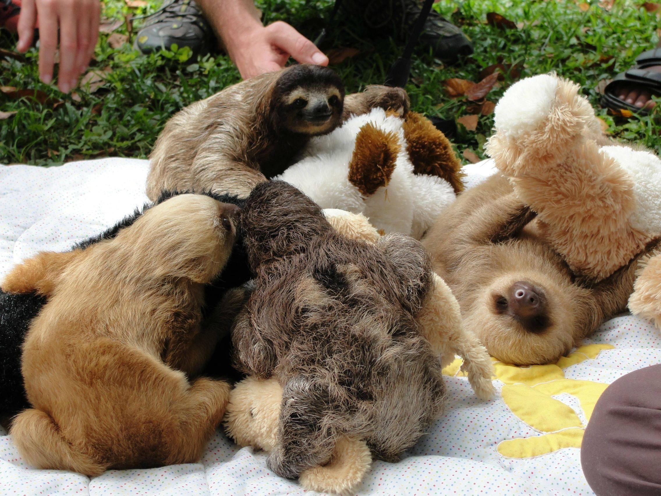 Sloth+Meme | Free Sloth Meme #764 HD Wallpaper | High Definition Wallpapers  For