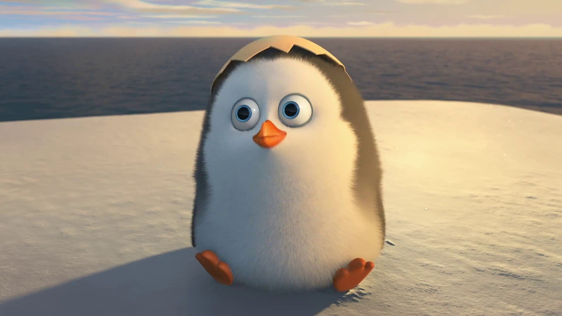 Baby Penguin Picture