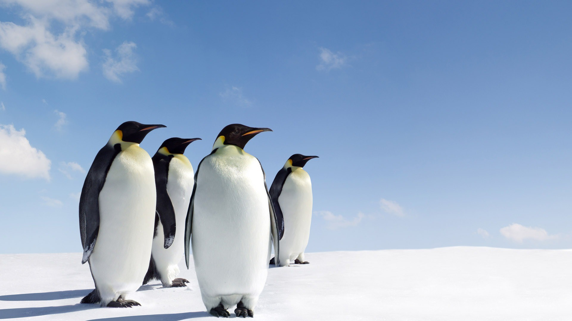 Excellence Images of Penguin Wallpaper HD