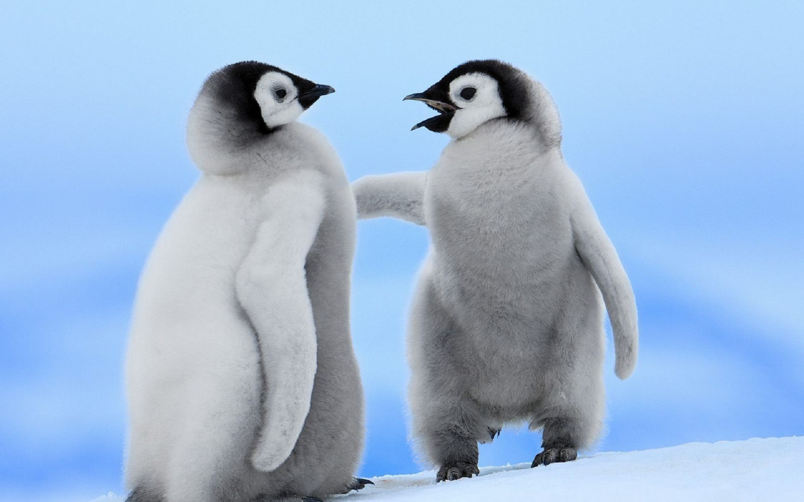 Penguin Wallpapers HD Pictures – One HD Wallpaper Pictures .