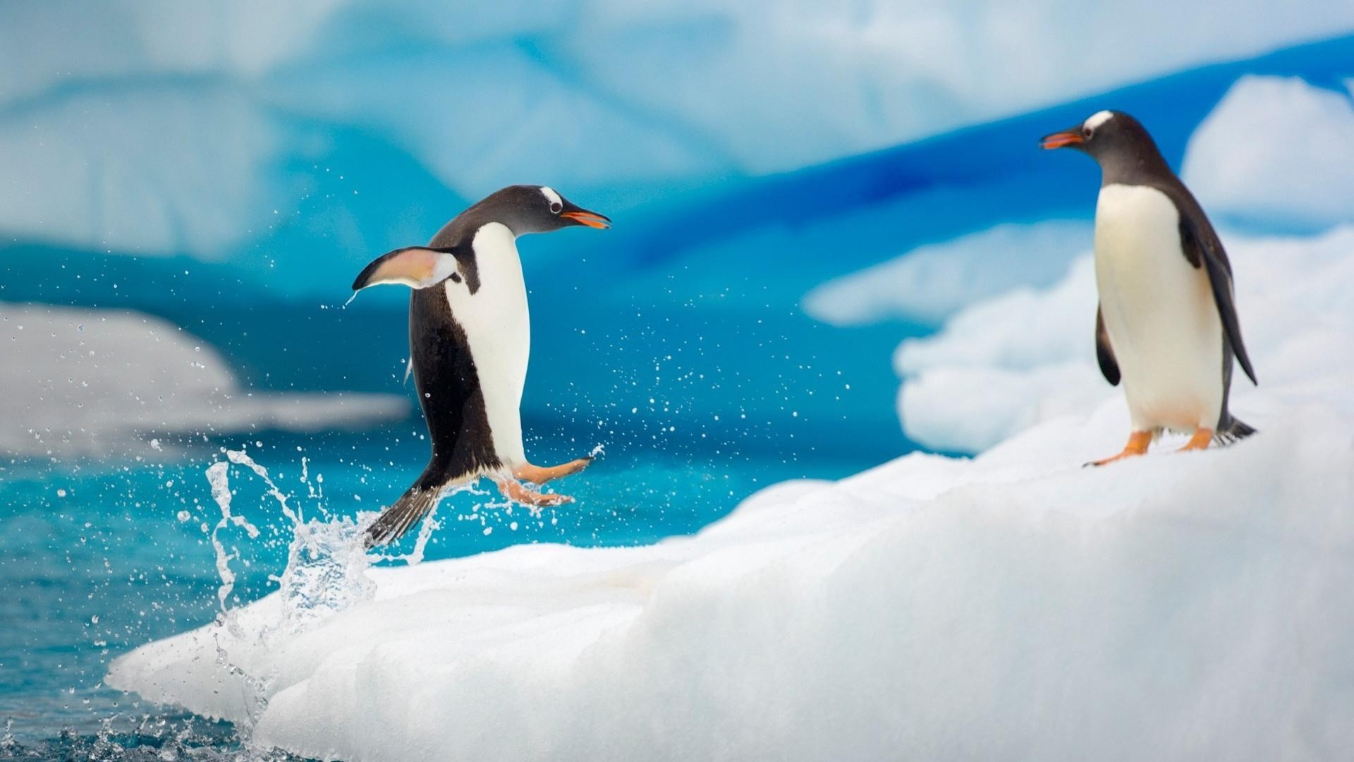 Baby Penguin Wallpapers Group Images Of Penguins Wallpapers Wallpapers)