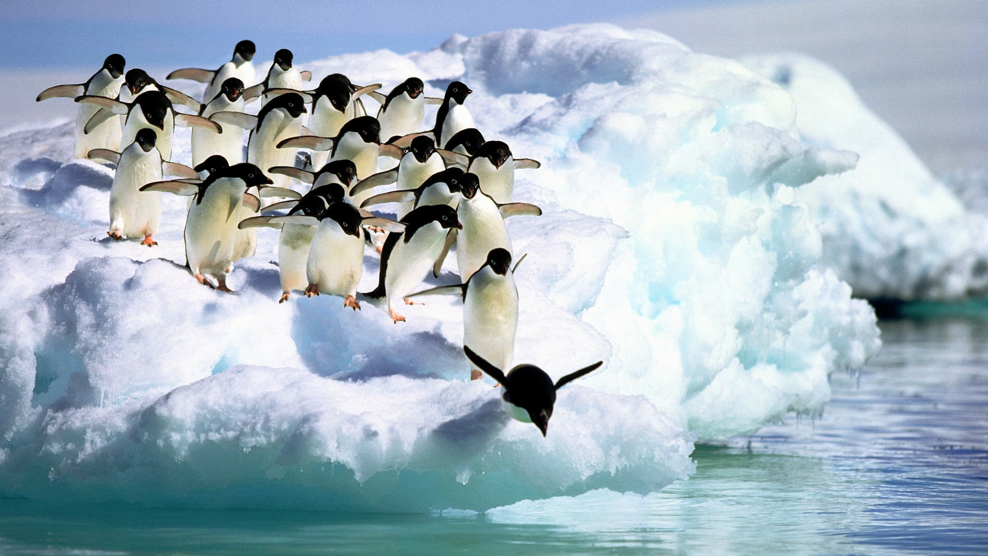 HD Penguins Wallpapers and Photos | HD Animals Wallpapers