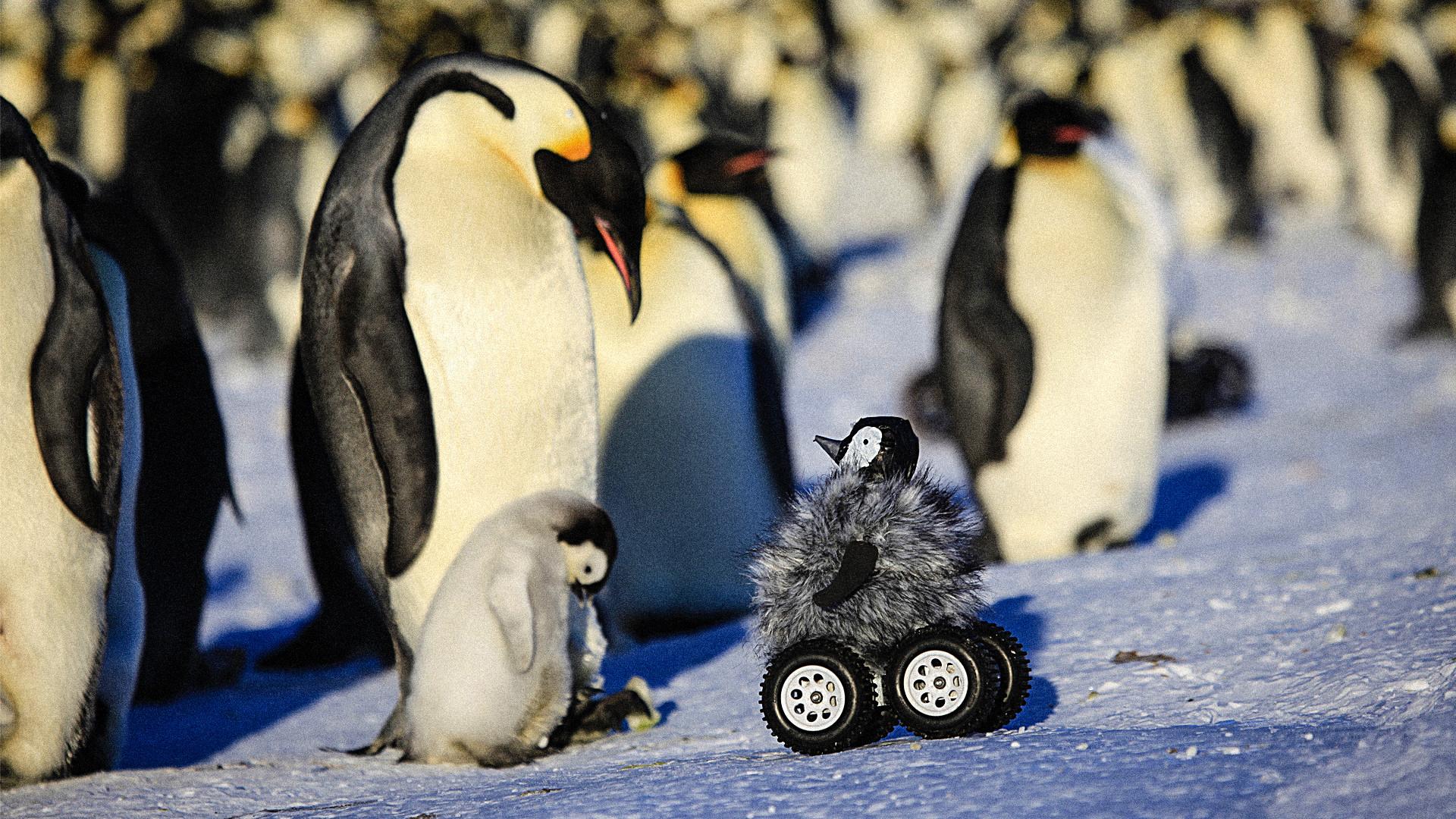 … Baby Penguin Robot_Plaid Zebra