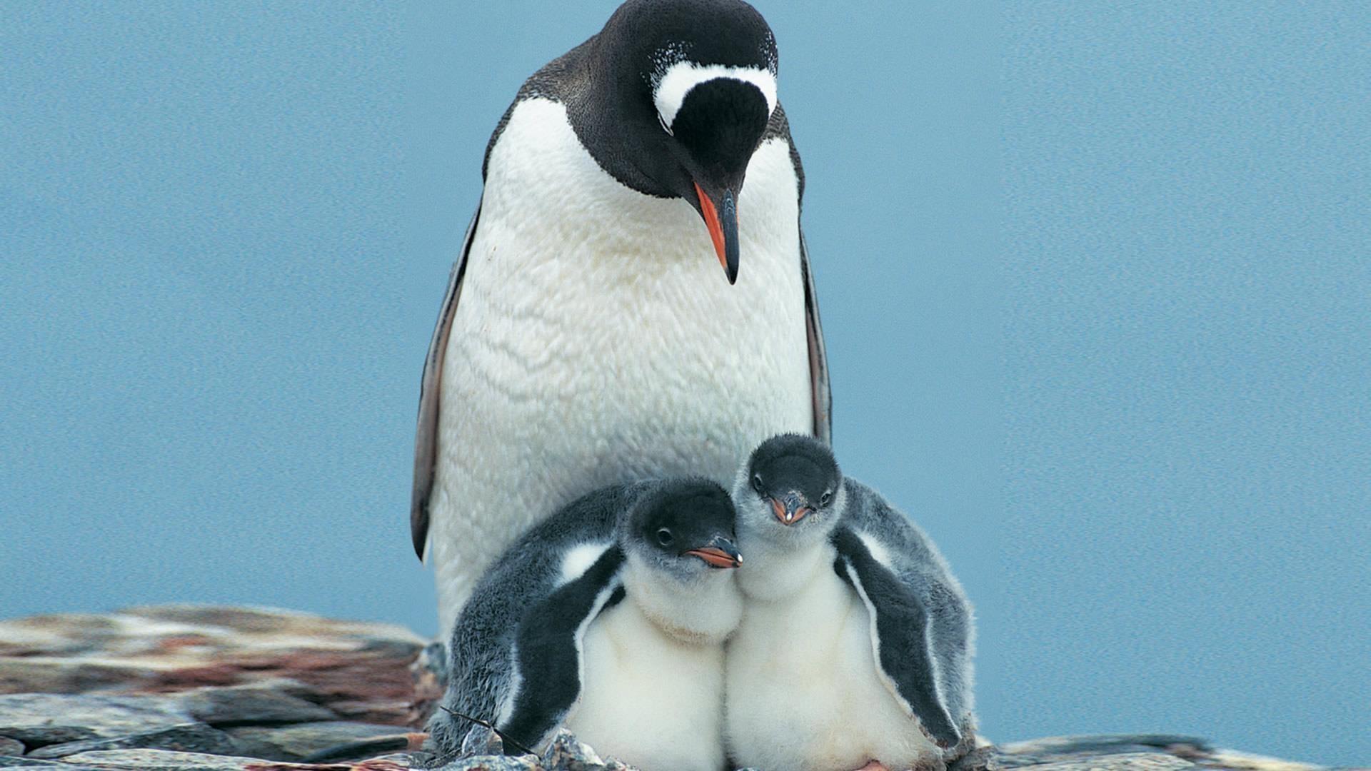Penguin-Photos-HD