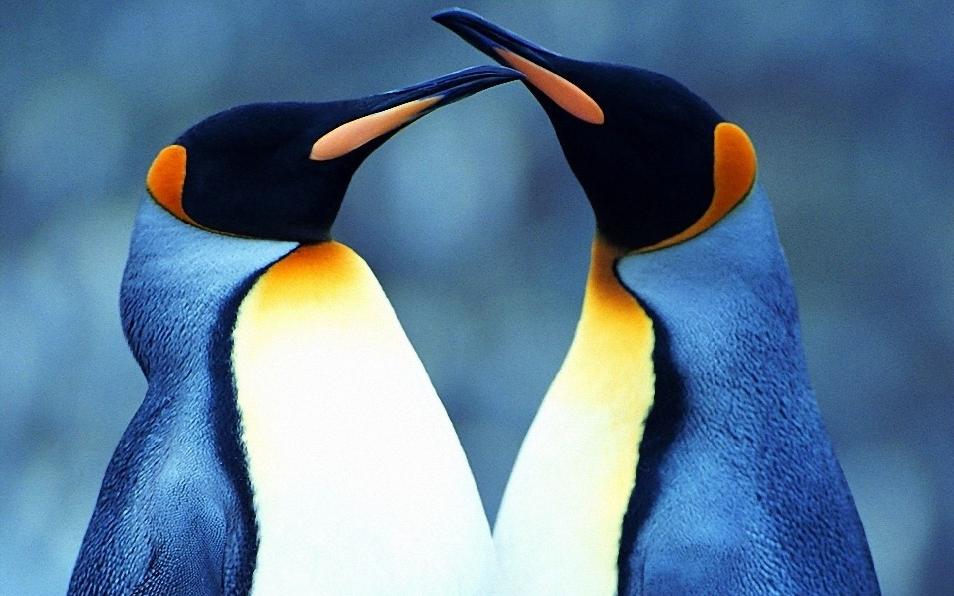 Baby <b>Penguin Wallpapers</b> Group …