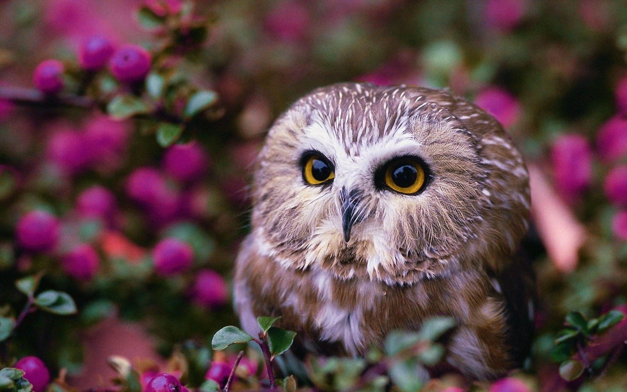 Photo of Cute Owl HD (p.3145469) – ZyzixuN Wallpapers