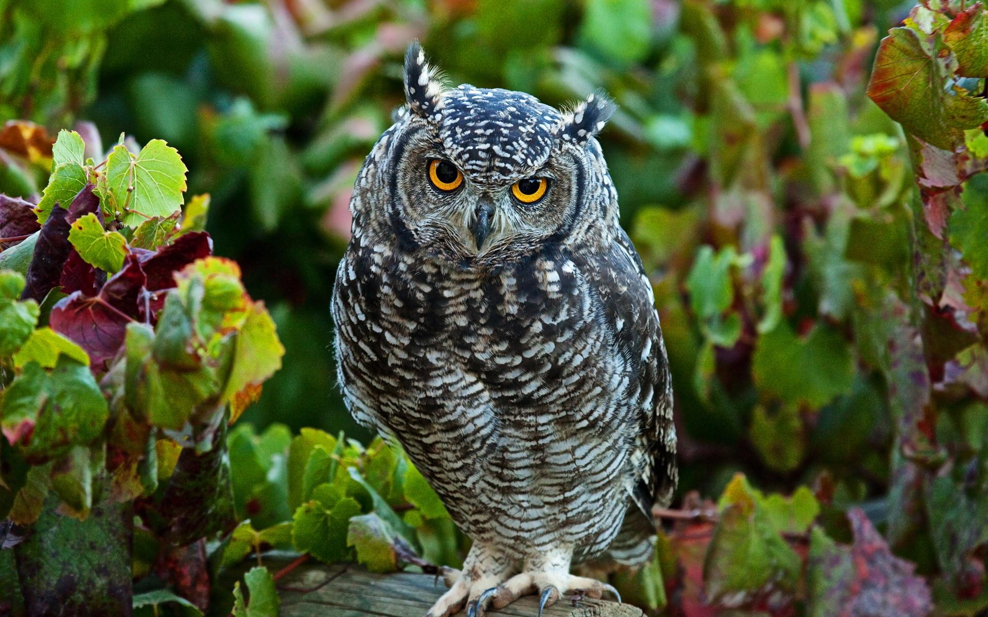 The 25+ best Cute owls wallpaper ideas on Pinterest   Owl background, Owl  cartoon and Owl wallpaper iphone