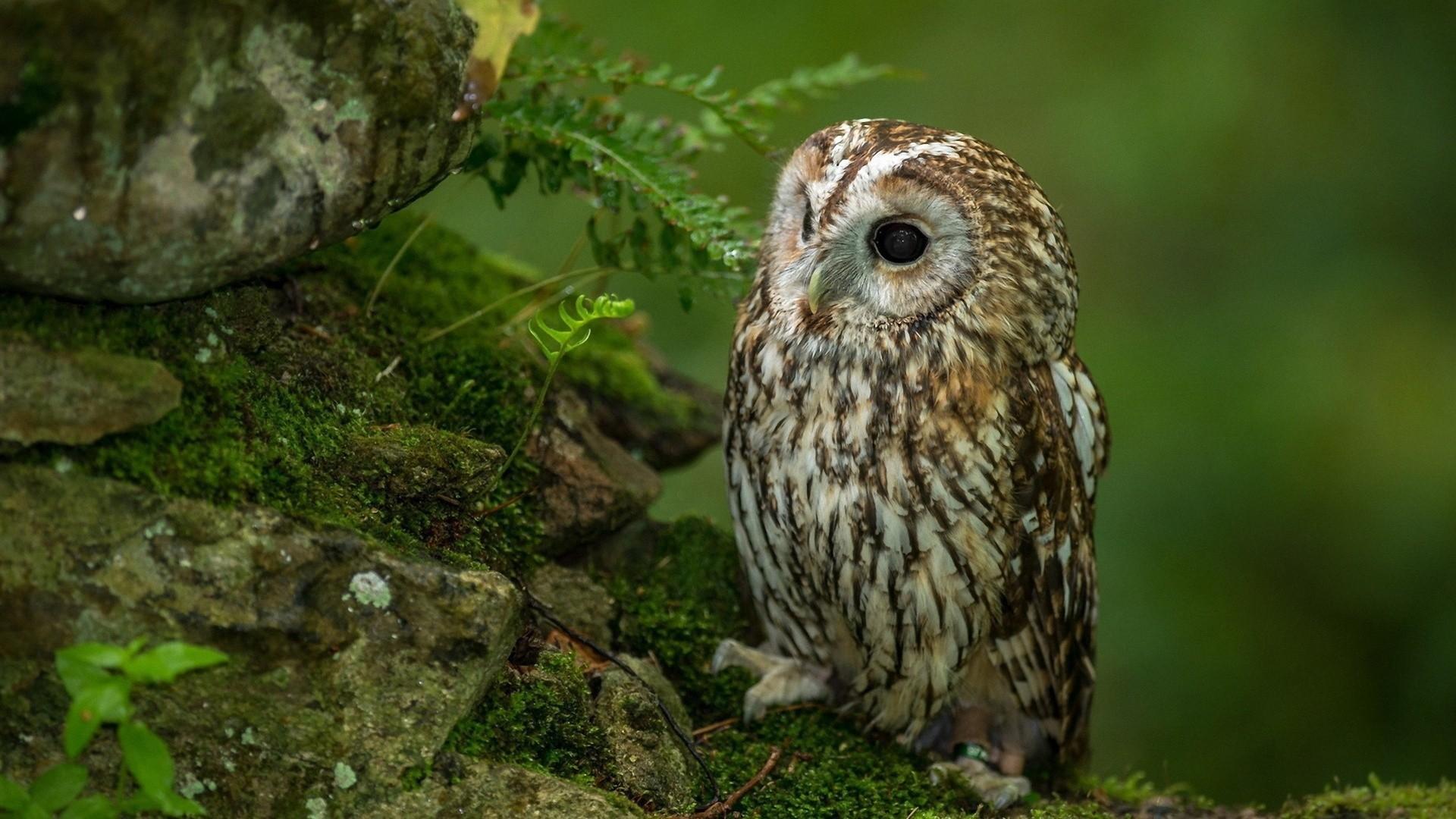 Cute Alone Owl Wallpaper