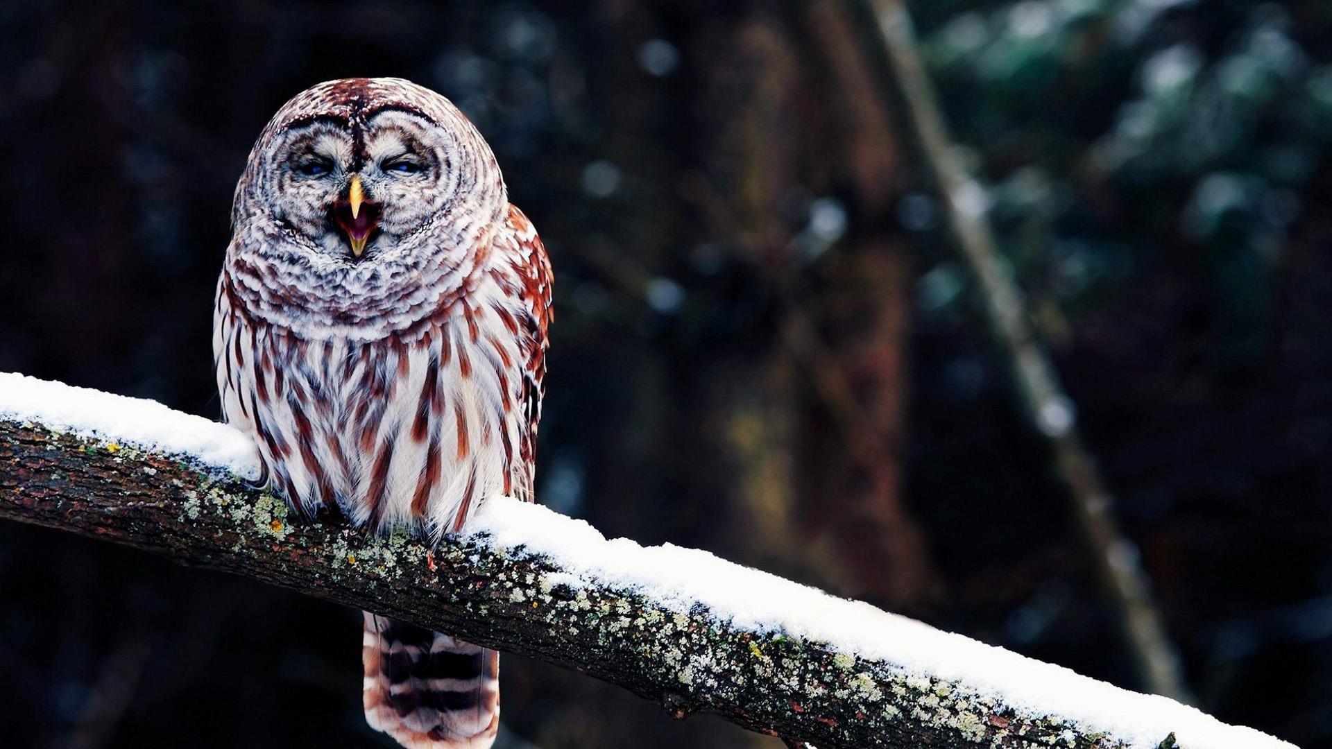 wallpaper.wiki-Free-Download-Cute-Owl-Wallpaper-PIC-