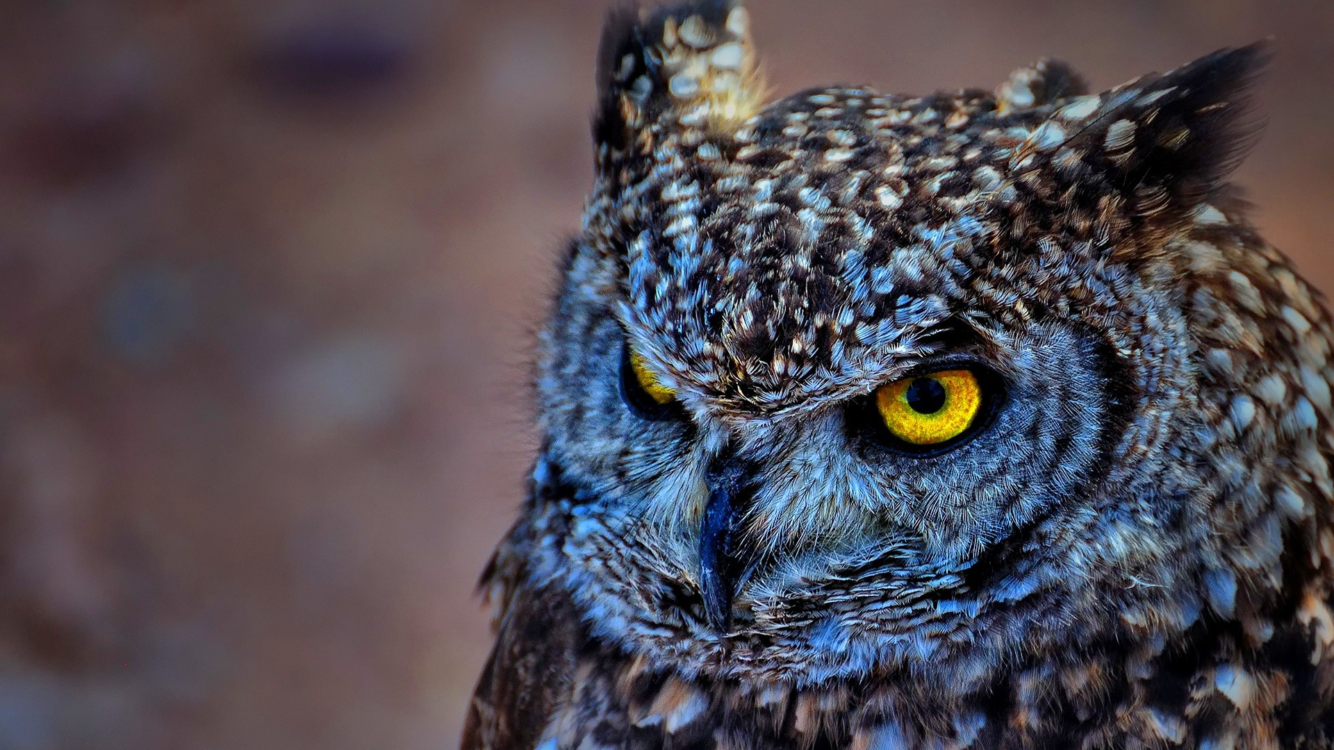 Cute Owl Wallpaper Collection For Free Download