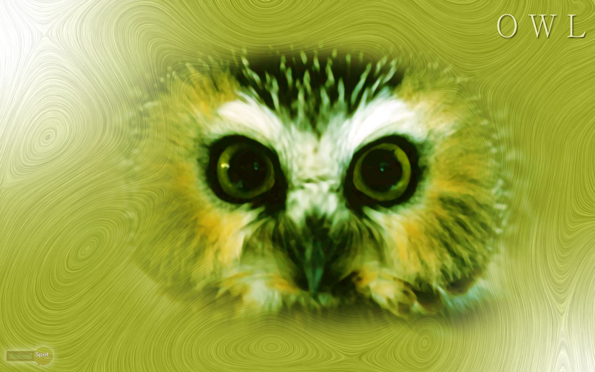 Cute Colorful Owl Wallpaper Images