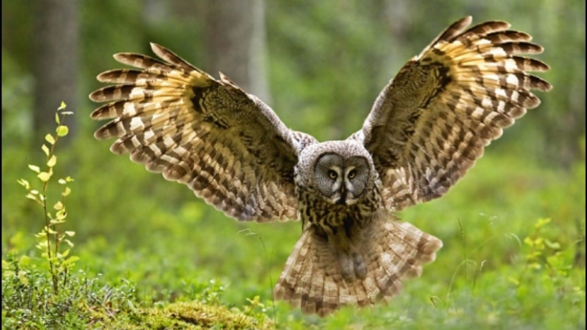 530 Owl HD Wallpapers   Backgrounds – Wallpaper Abyss – Page 16