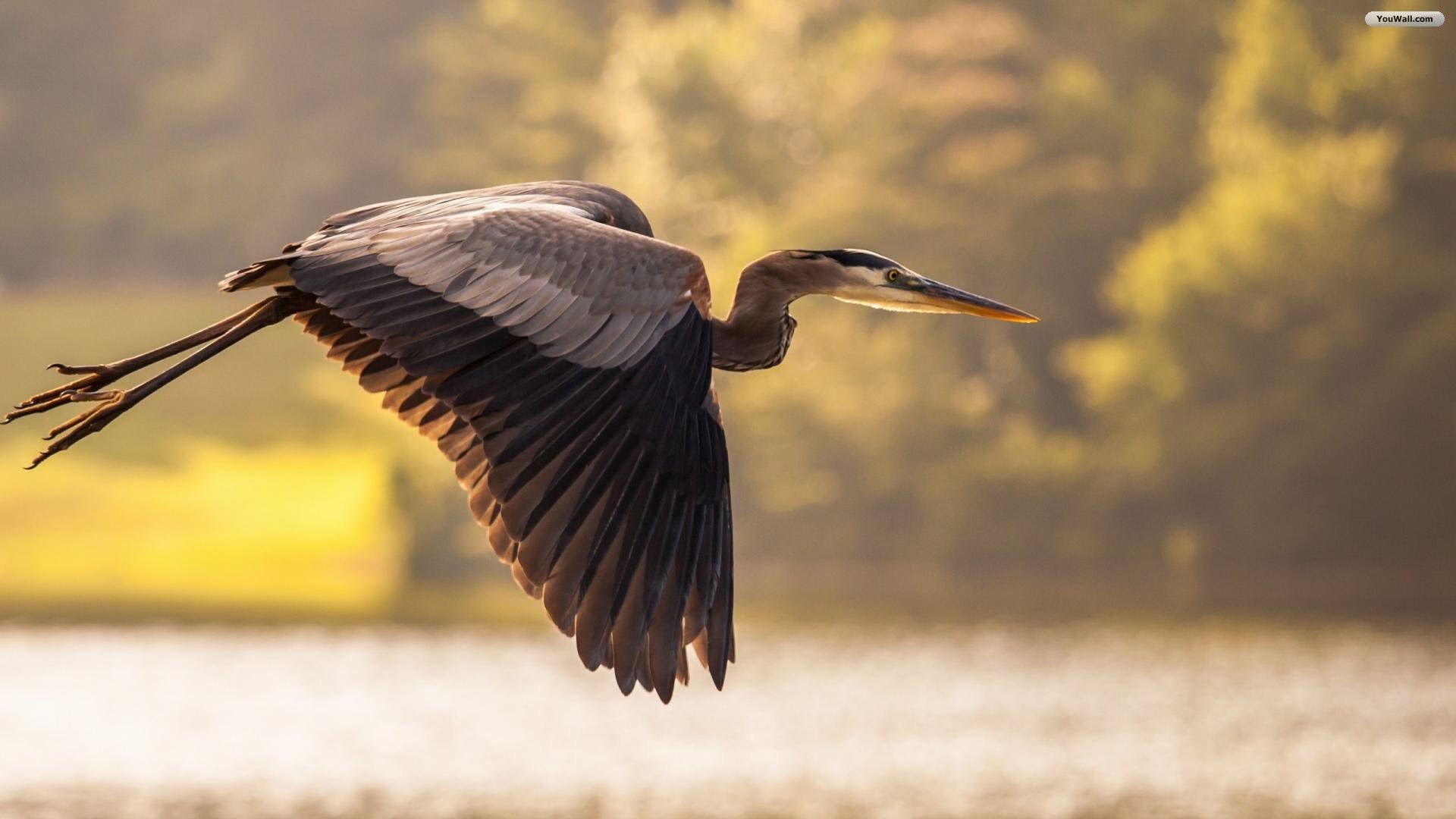 Related Wallpapers from Cute Owl Wallpaper. Flying Heron Wallpaper