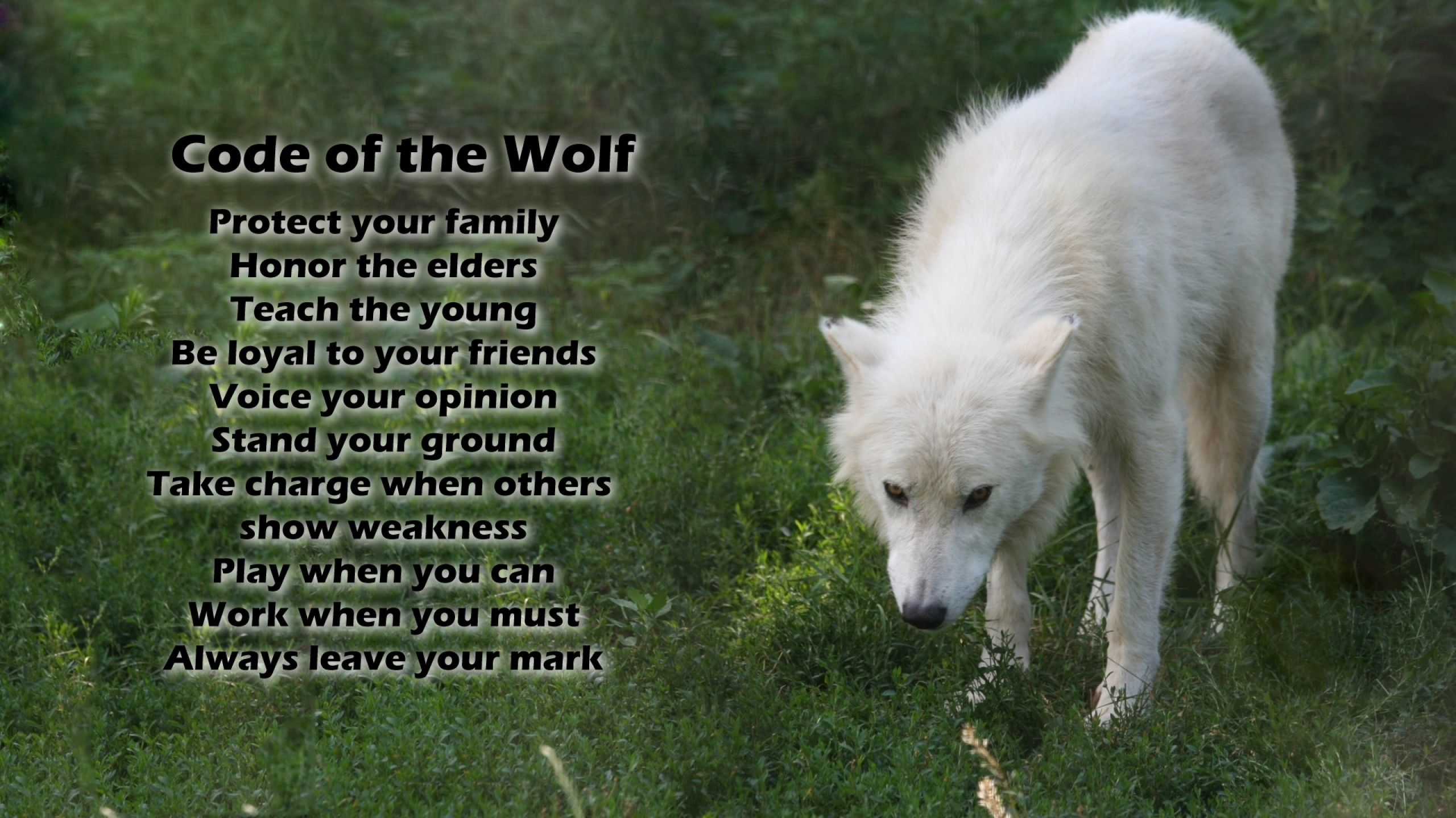 Free desktop wallpapers and backgrounds with code of the wolf, code, nice,  white, wolf. Wallpapers no.