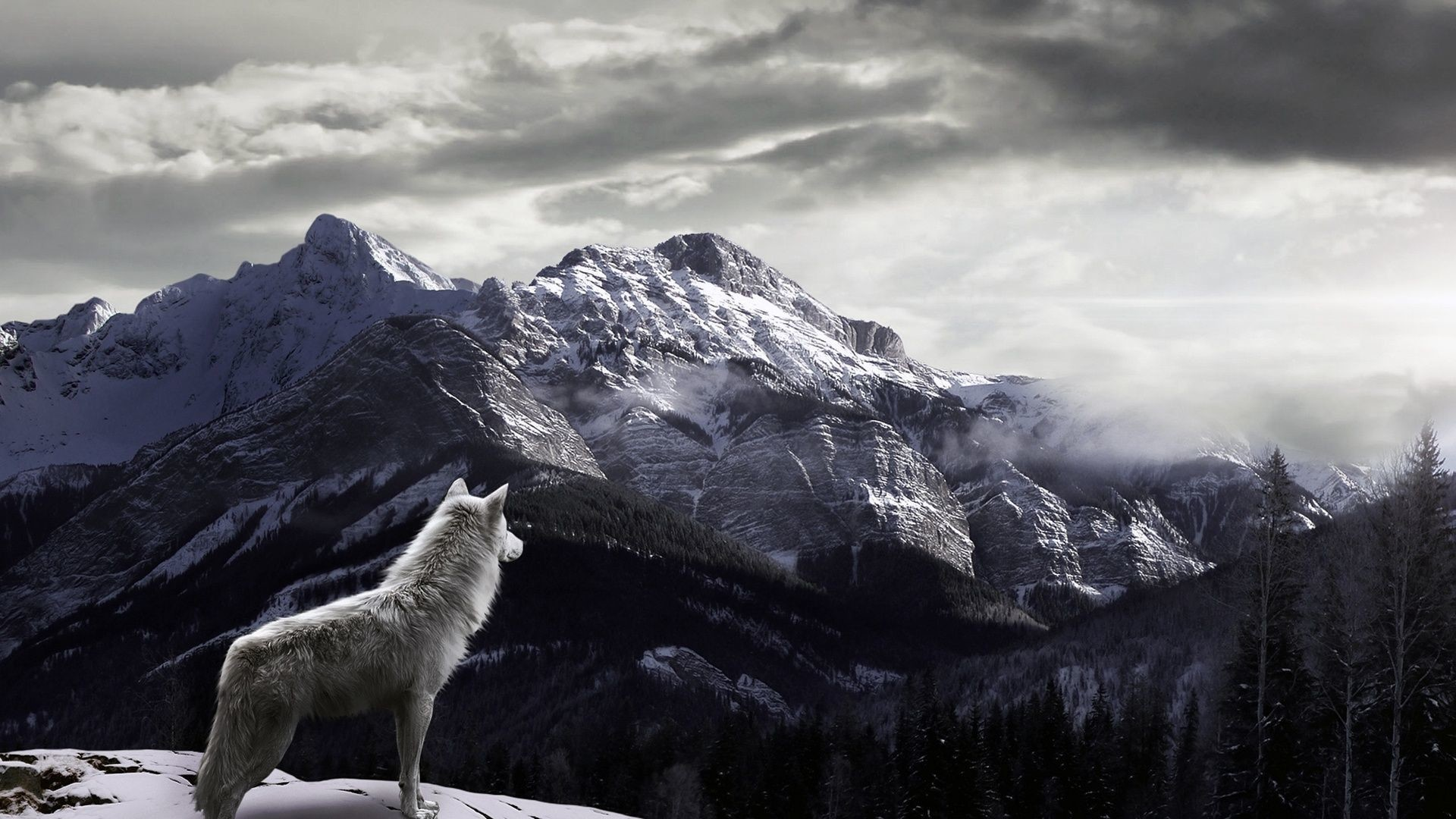 781355942 Wolves Wallpapers   Wolves Backgrounds