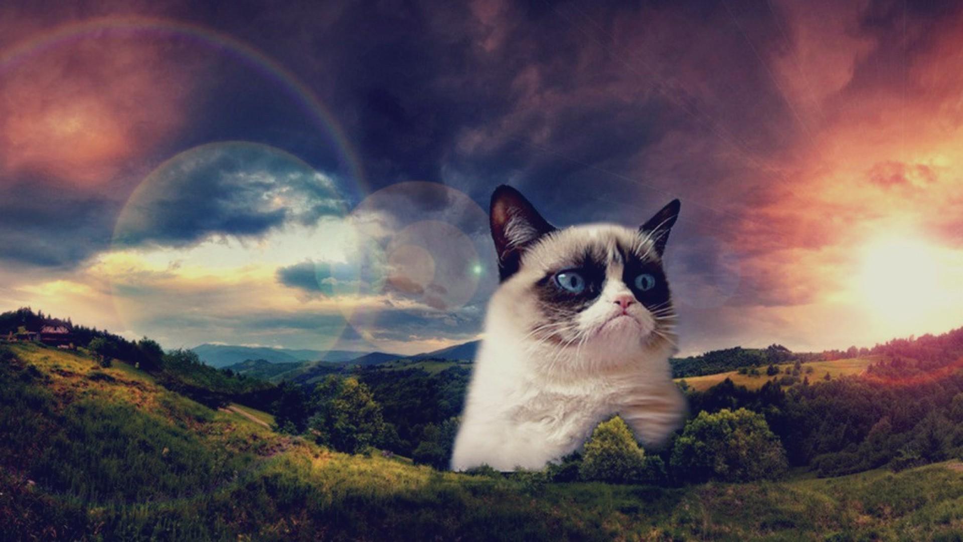Grumpy Cat HD Wallpapers, 0.3 Mb, Cindy Holdman