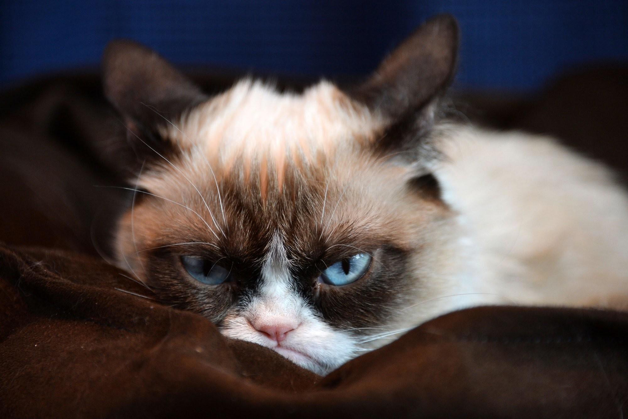 Grumpy Cat HD Desktop Wallpaper   HD Desktop Wallpaper