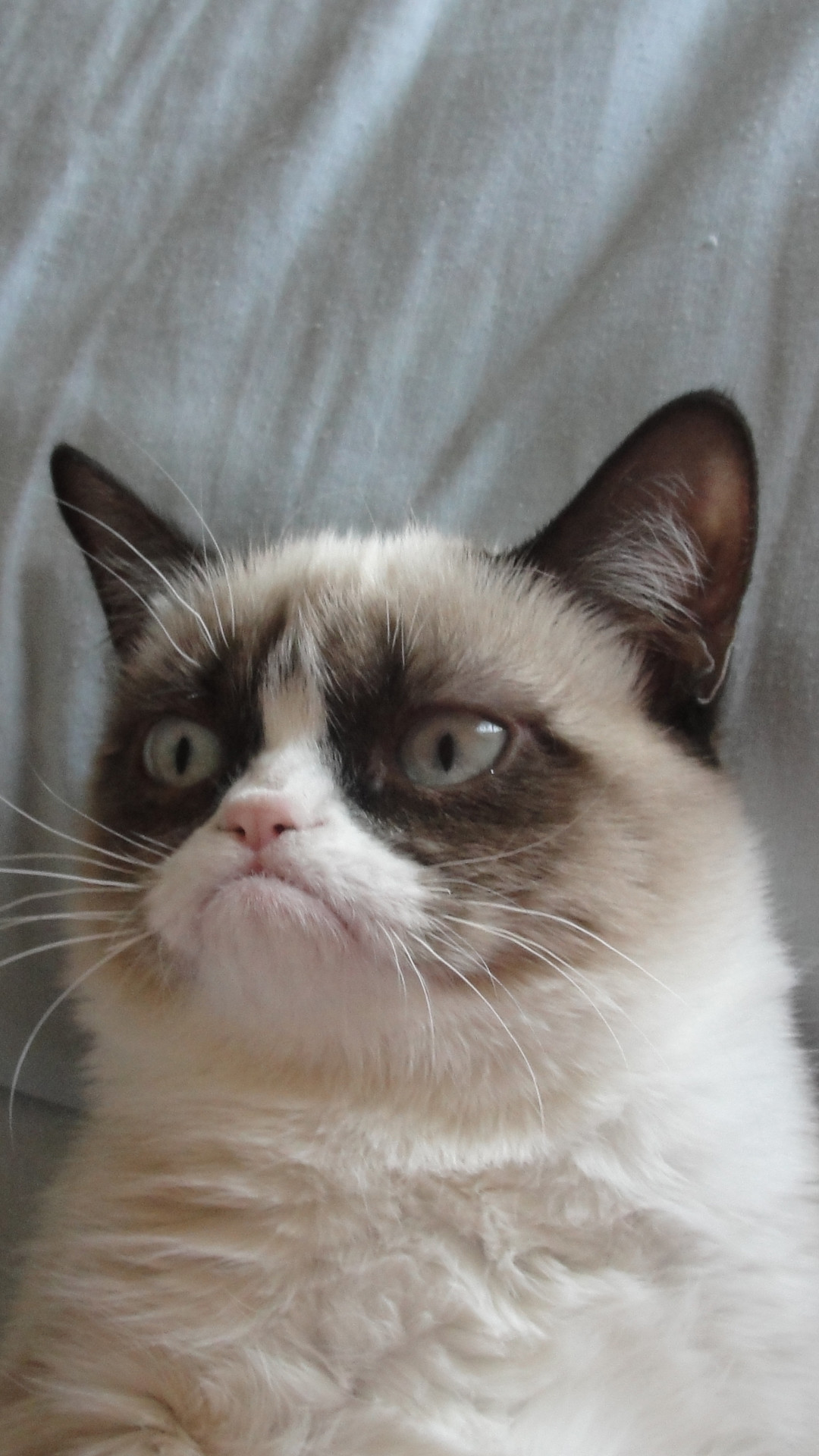 Grumpy Cat iPhone 6 Plus HD Wallpaper …