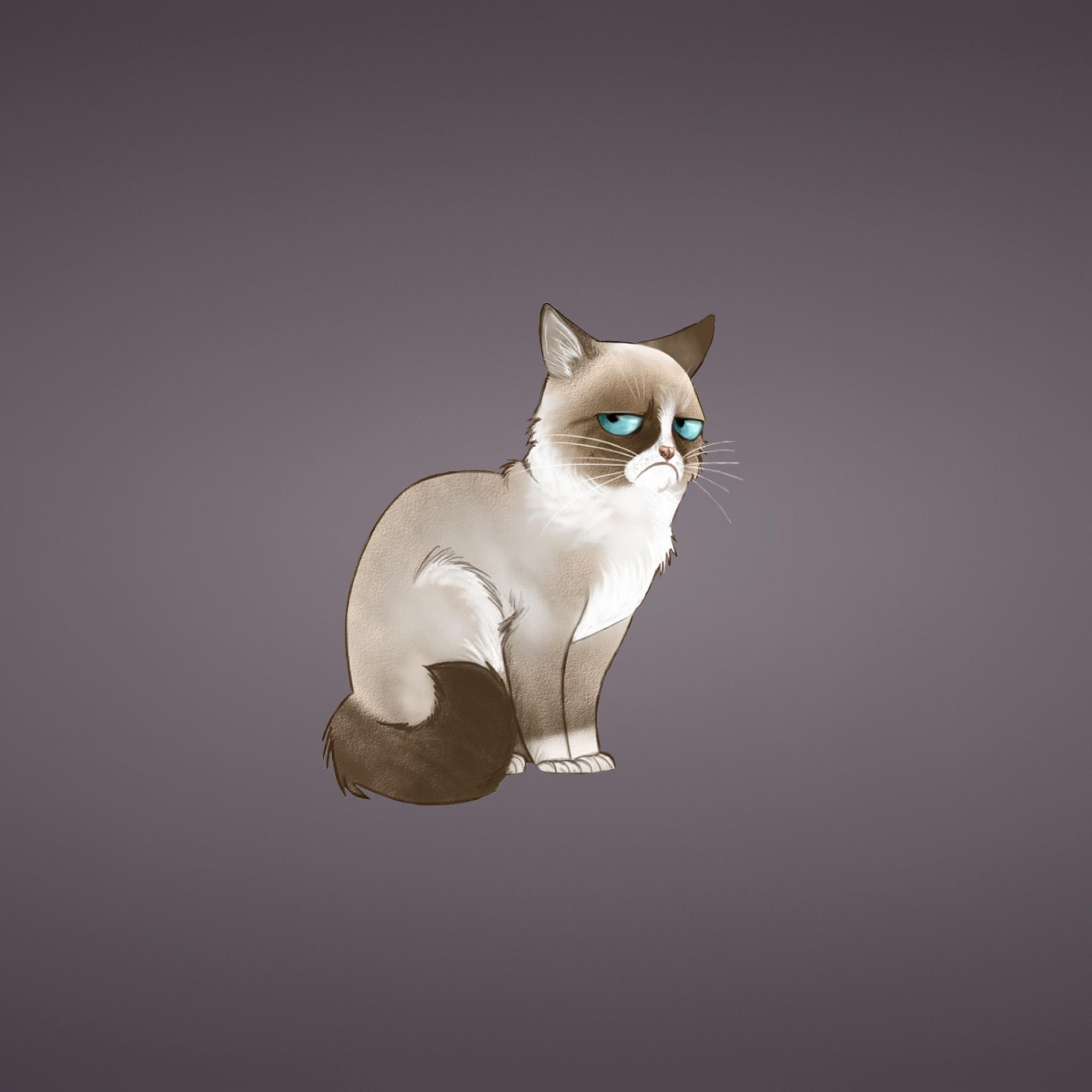 Preview wallpaper grumpy cat, meme, cat 2048×2048