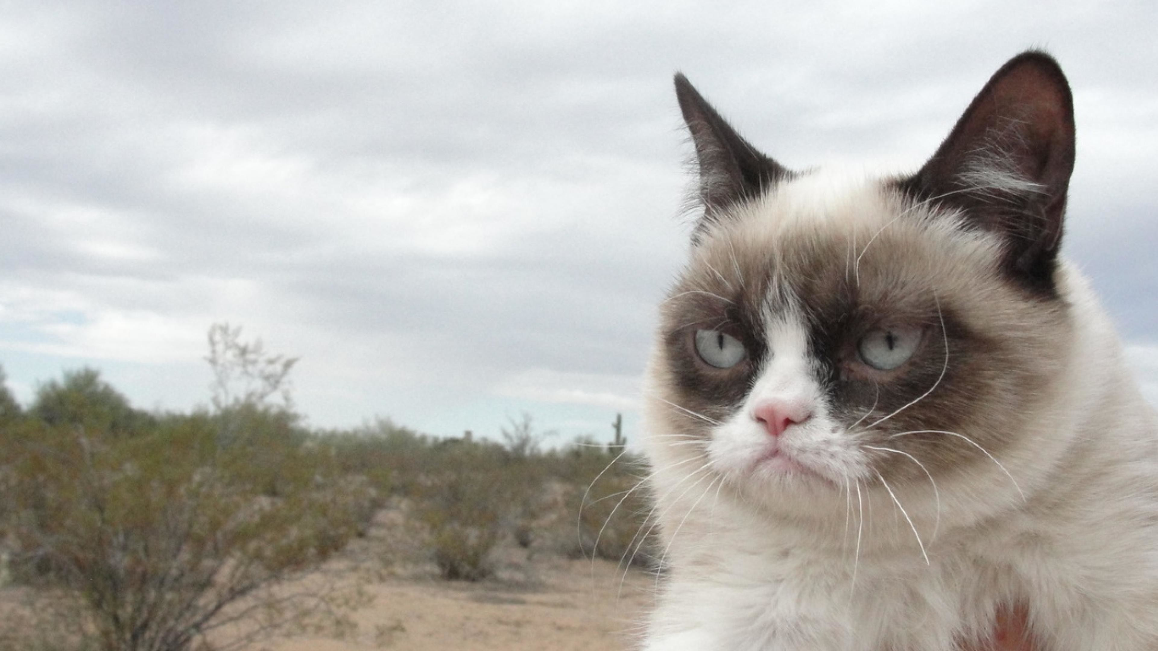 Filename: wp1838209.jpg · view image. Found on: grumpy-cat-wallpapers