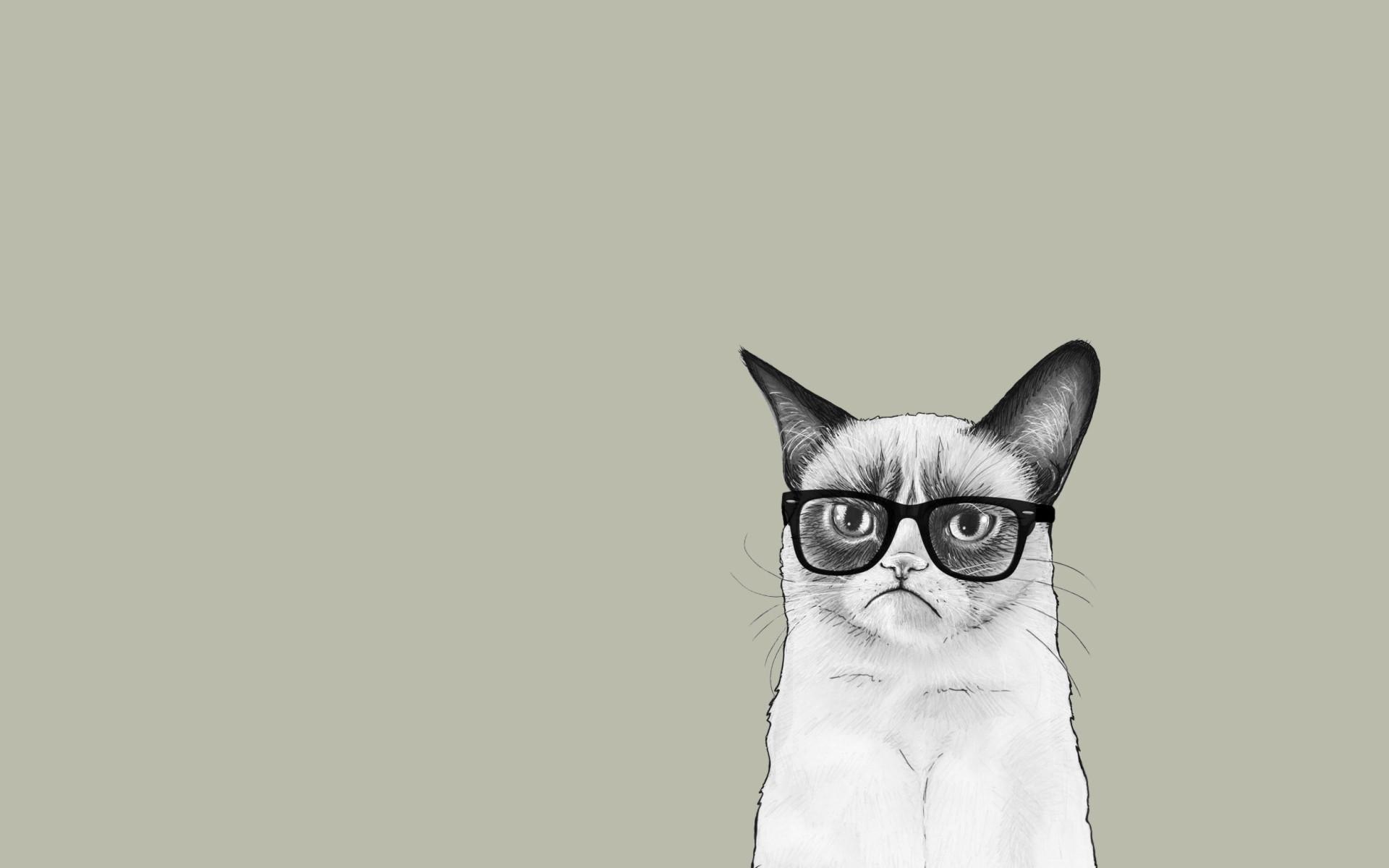 Grumpy Cat With Sunglass Wallpaper