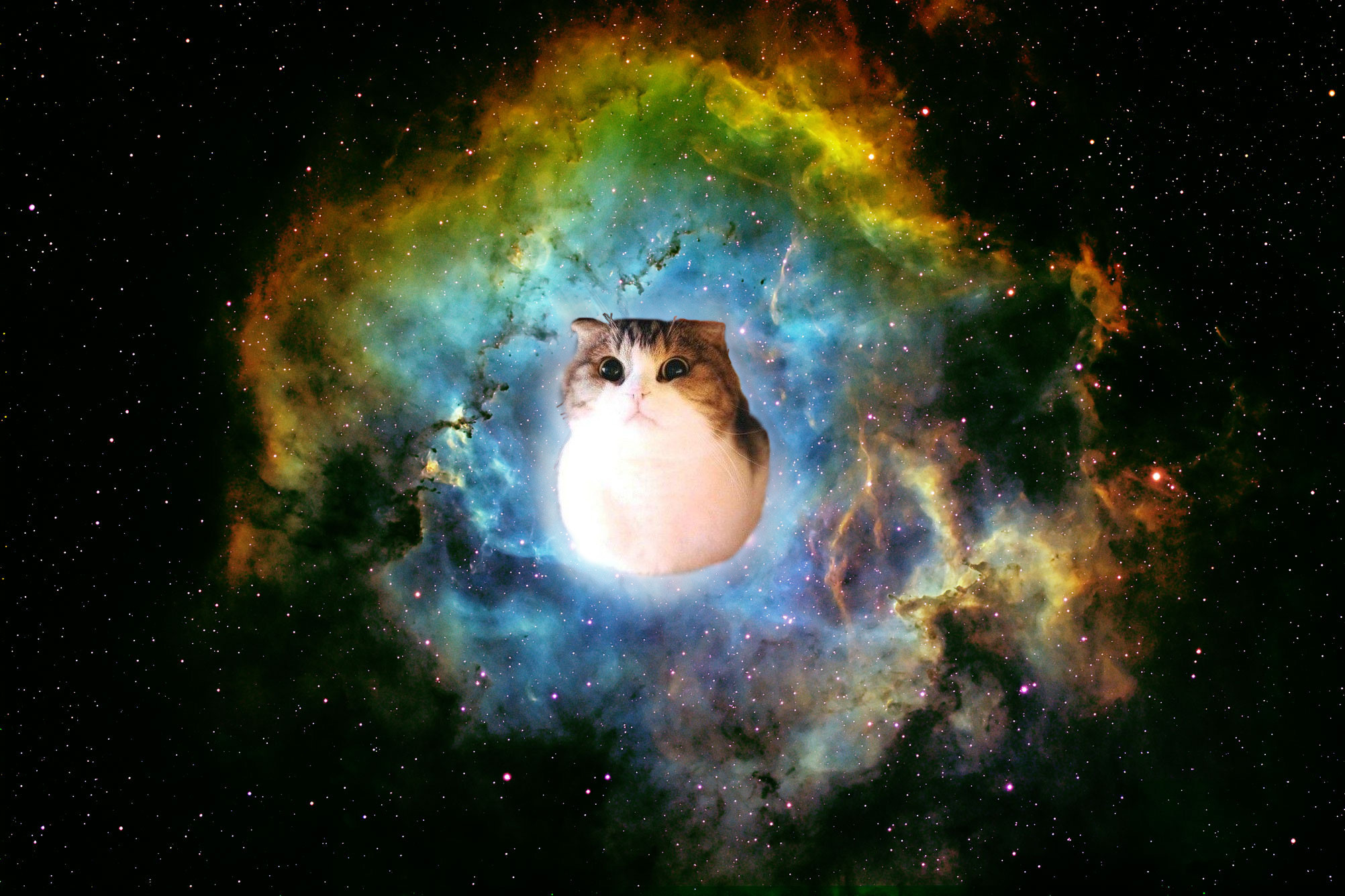 Space Cat Wallpapers Hd Resolution …