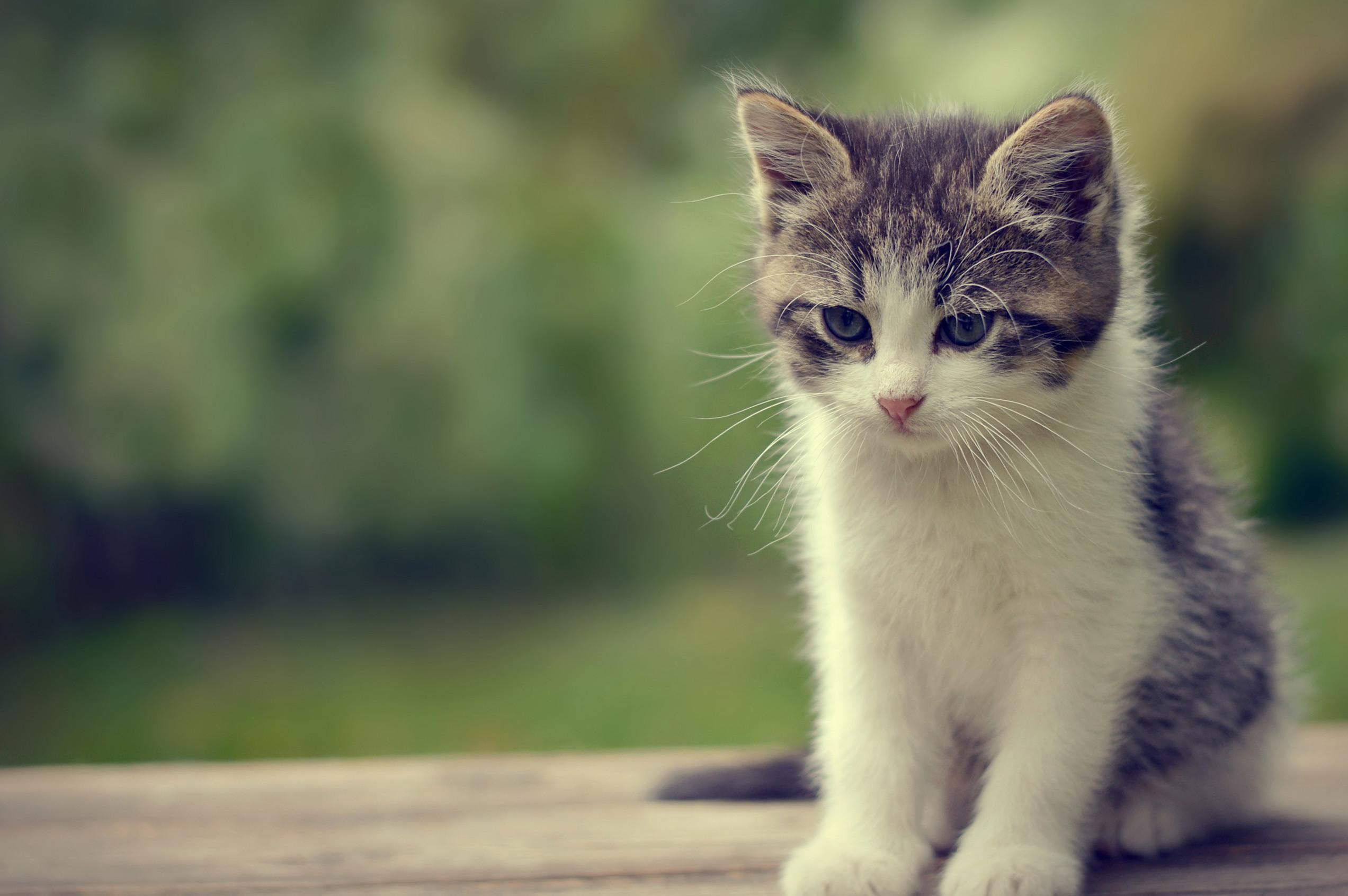 Cute Cat B:44-PI 100% Quality HD Wallpapers