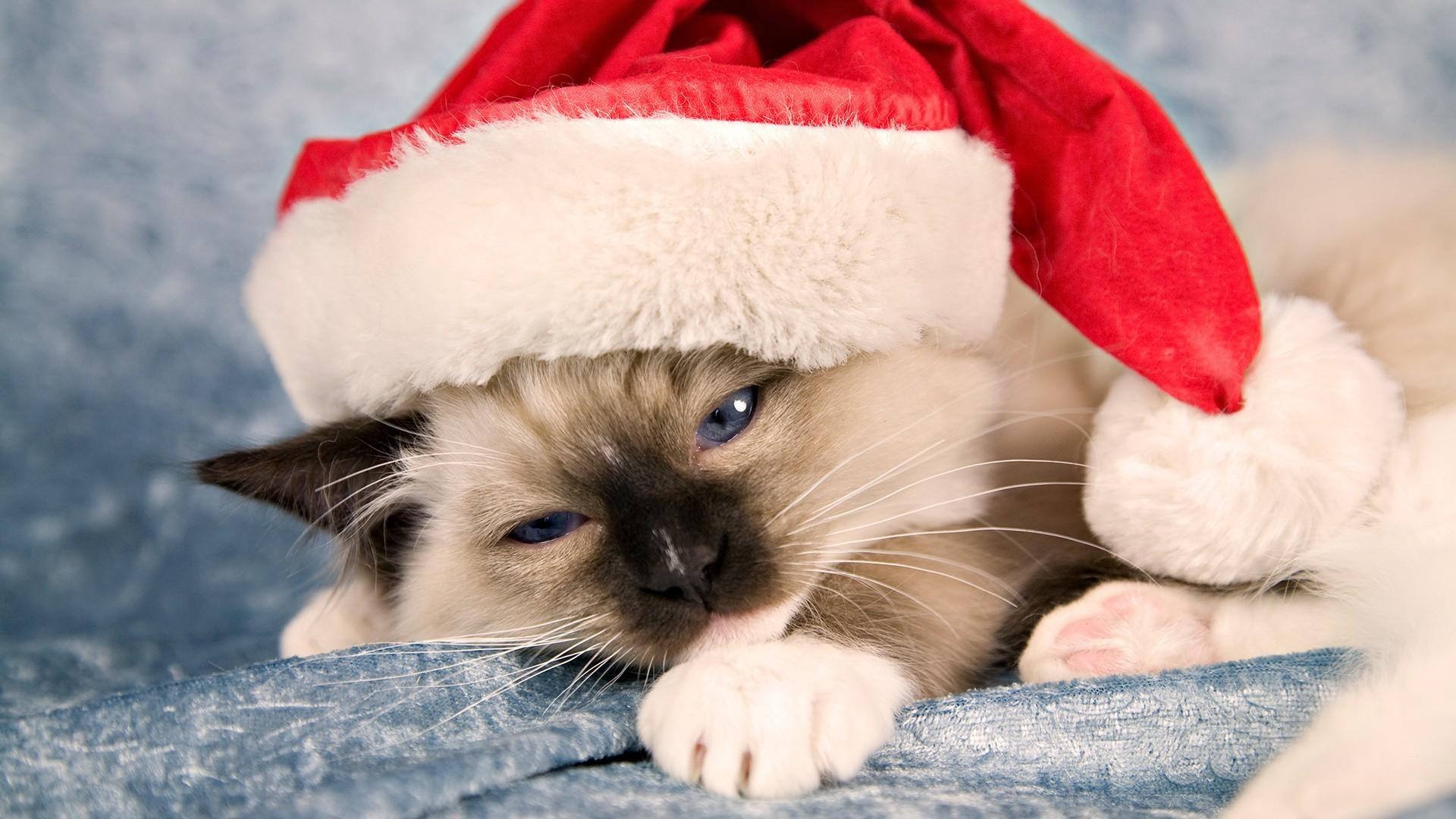 Grumpy Cat Christmas Hat