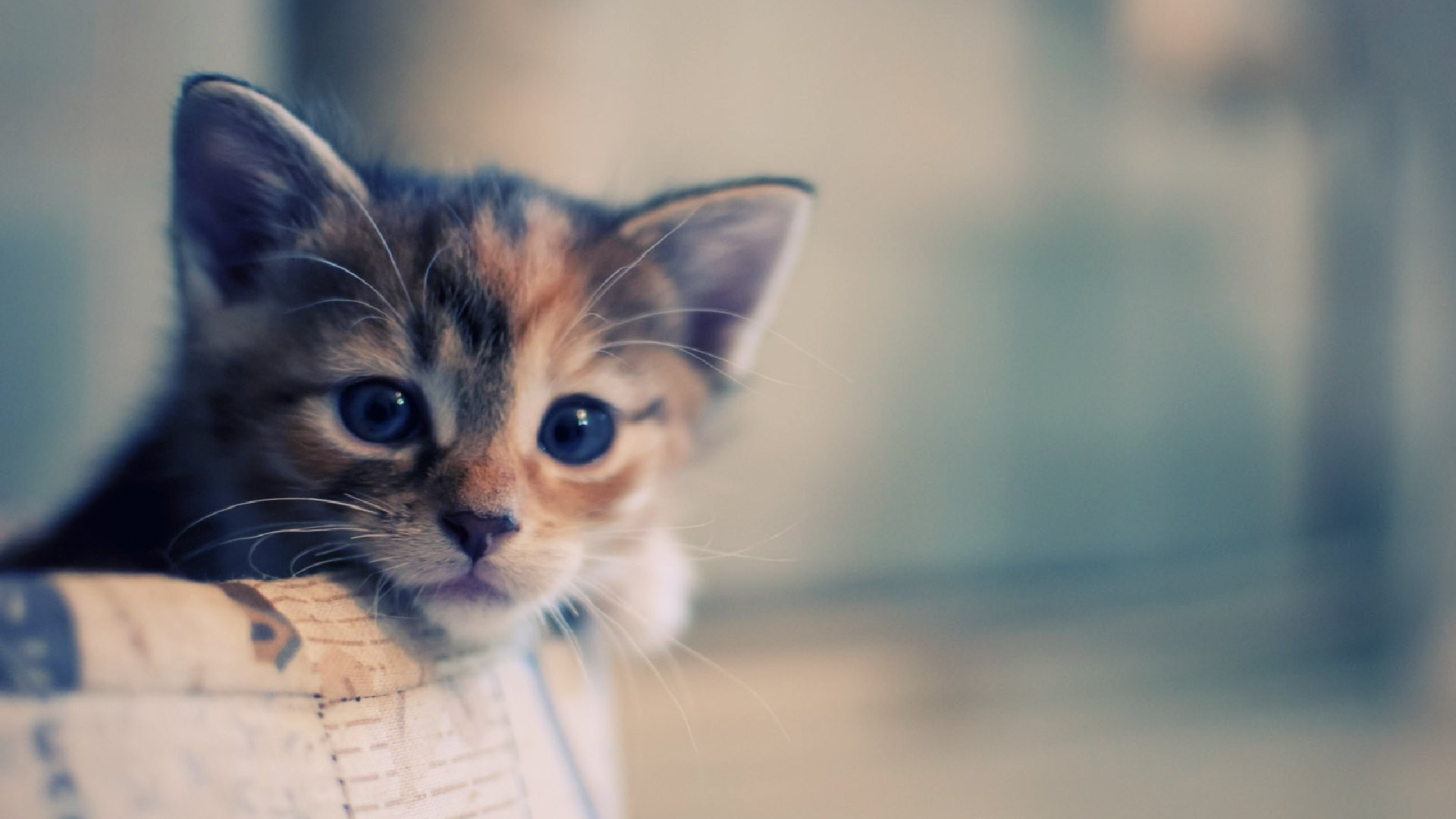 Cute Cat Wallpaper for Desktop   HD Wallpapers   Pinterest   Cat wallpaper, Hd  wallpaper and Wallpaper