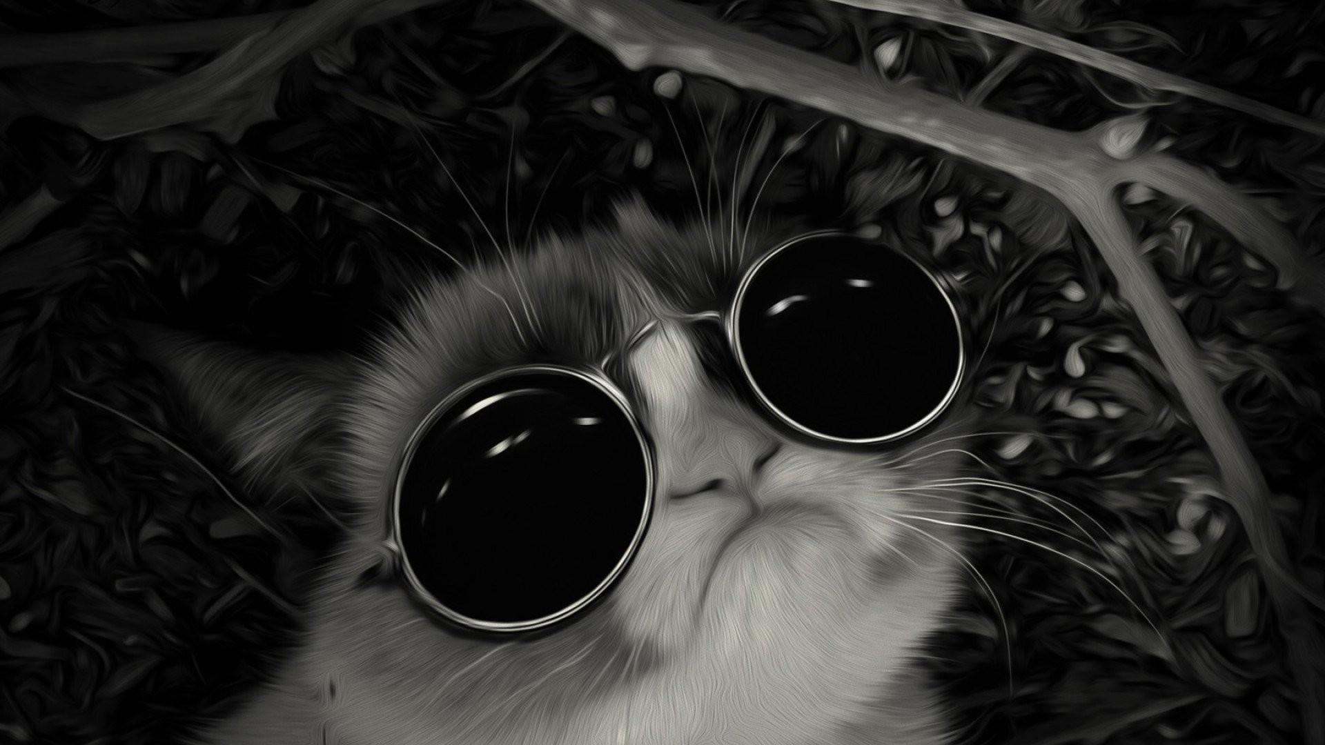 Grumpy Cat Sunglasses …