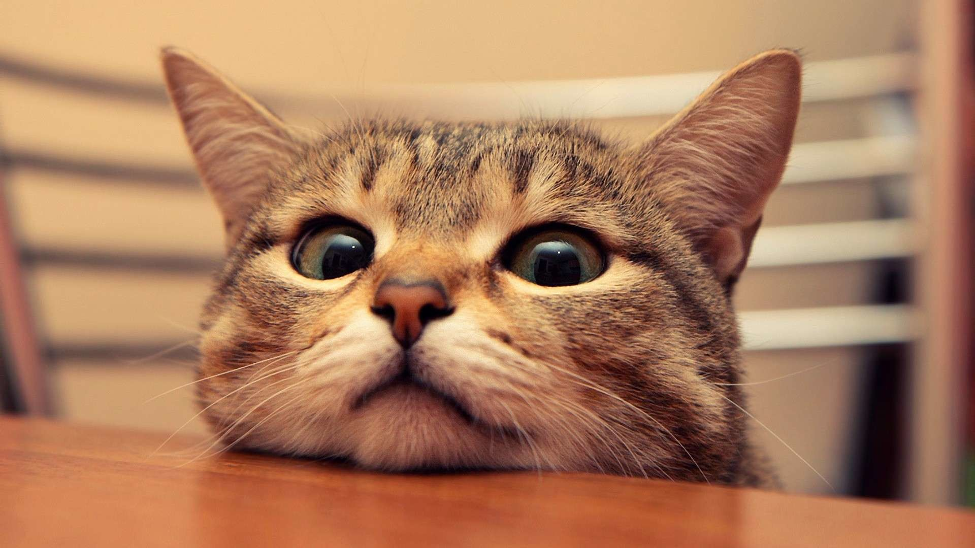 Cat Wallpaper Tumblr.