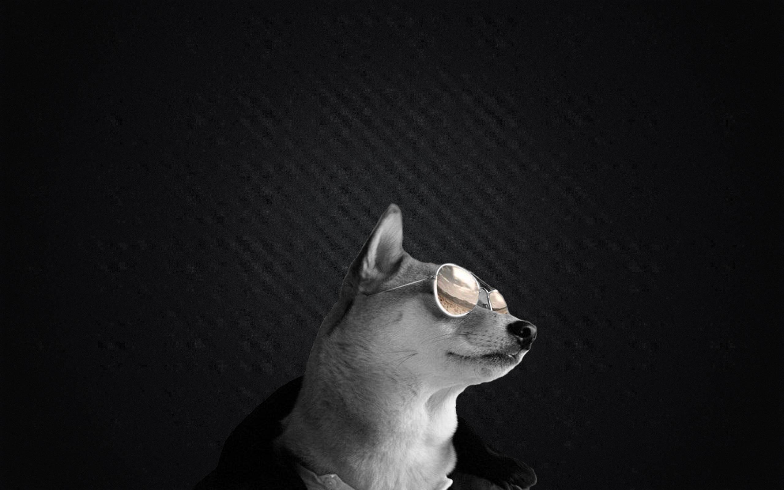 Badass doge with sunglasses wallpaper …