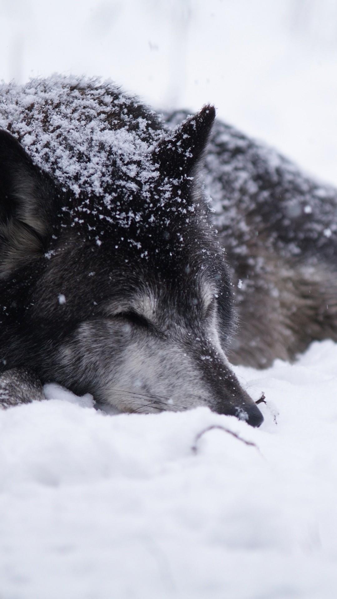 Preview wallpaper wolf, snow, blizzard, cold, warm, black white 1080×1920