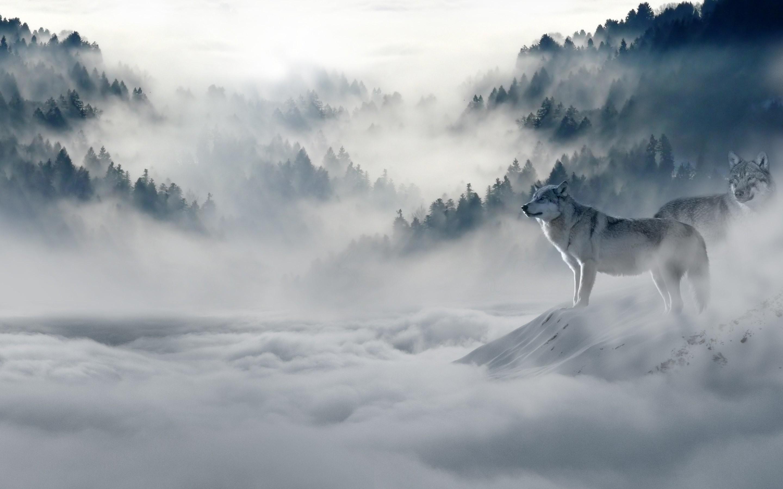 4K Wolves Wallpaper For PC#2