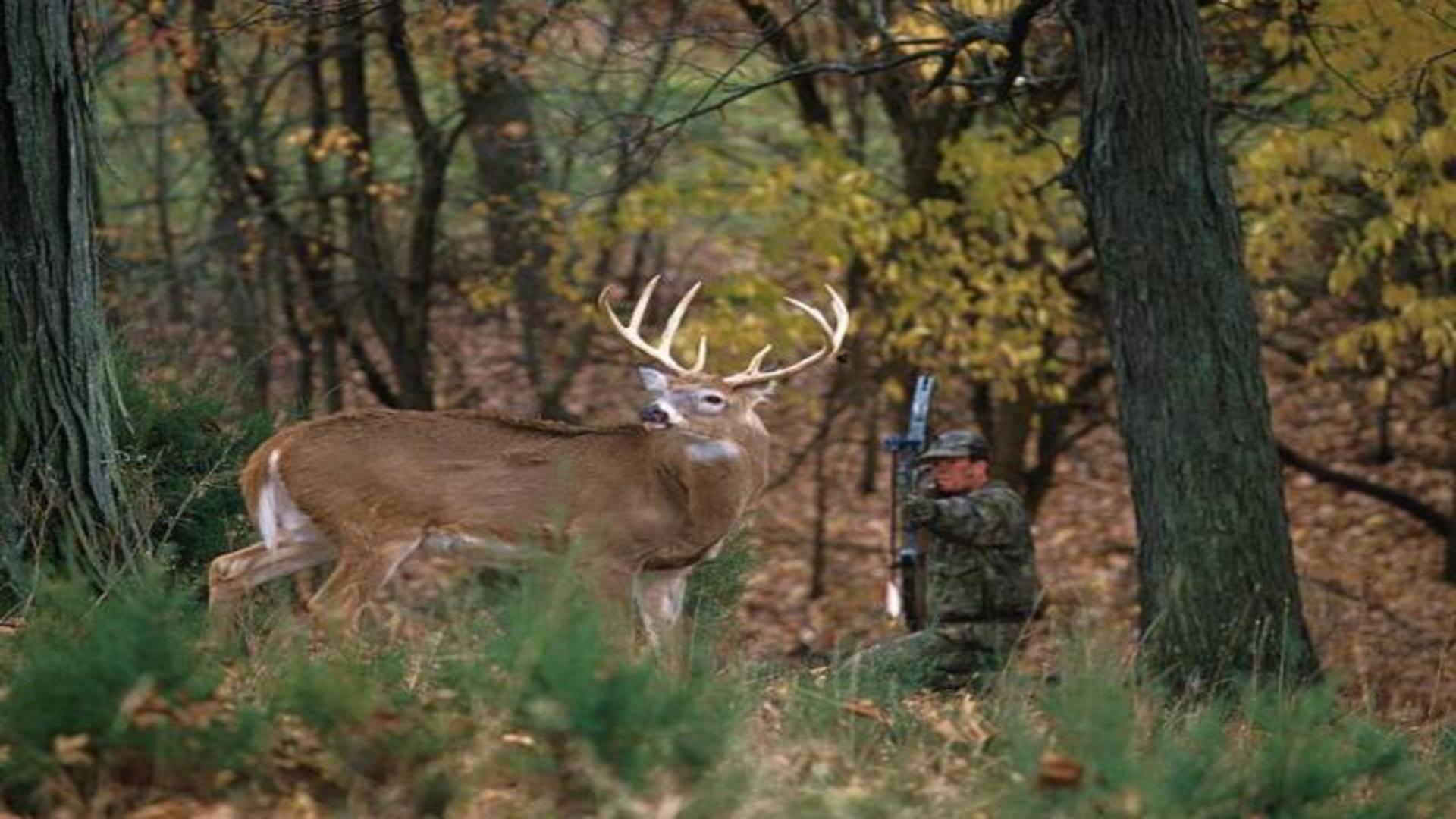 Bow hunter drawing on white tailed deer buck free desktop .