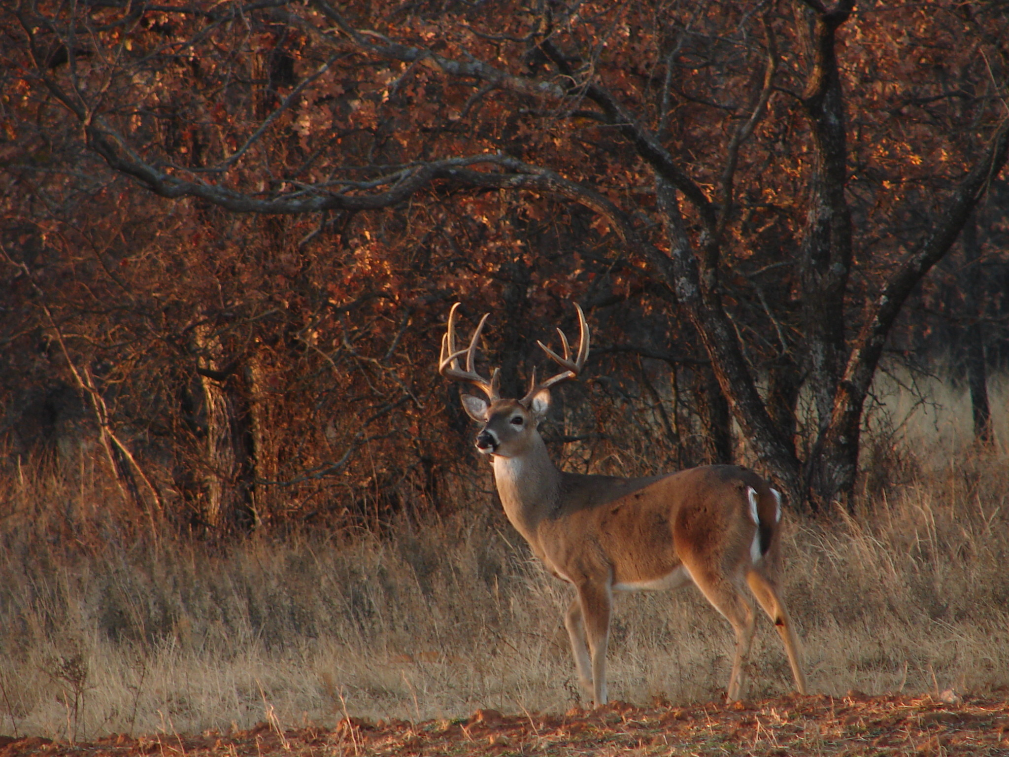 Whitetail Deer Hunting Forums Thread Cool Pics Age And