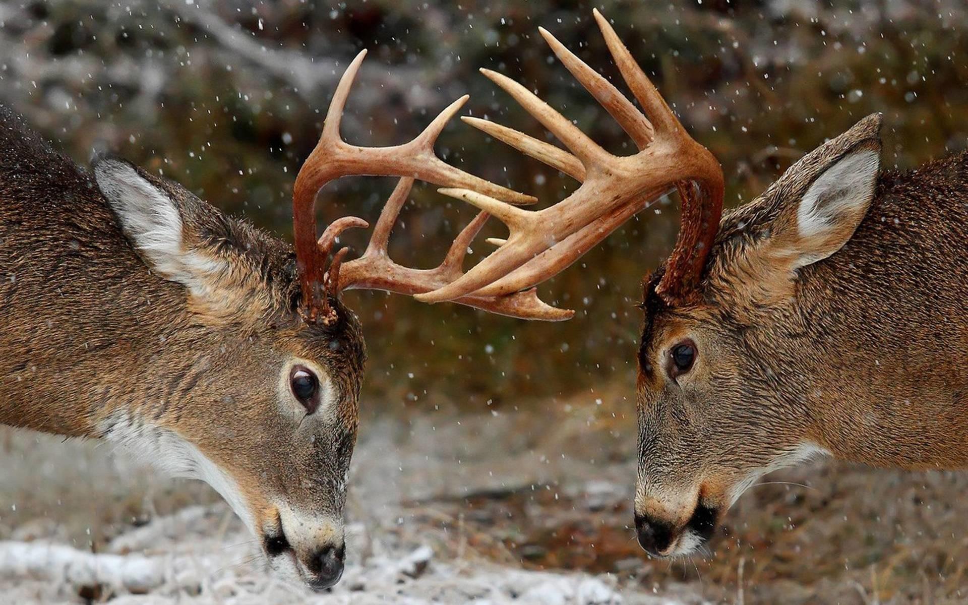 deer iphone hd wallpapers | Desktop Backgrounds for Free HD .