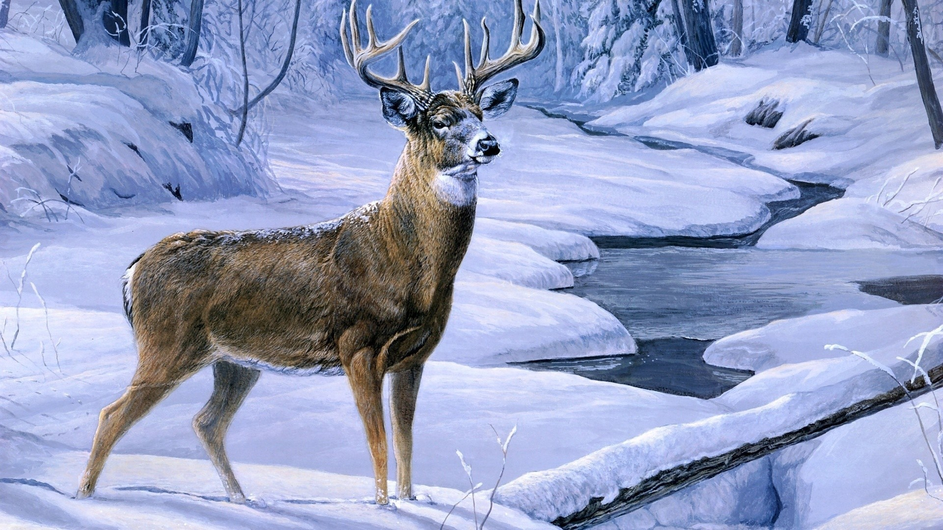 Deer Wallpaper Collection For Free Download | HD Wallpapers | Pinterest | Deer  wallpaper and Wallpaper