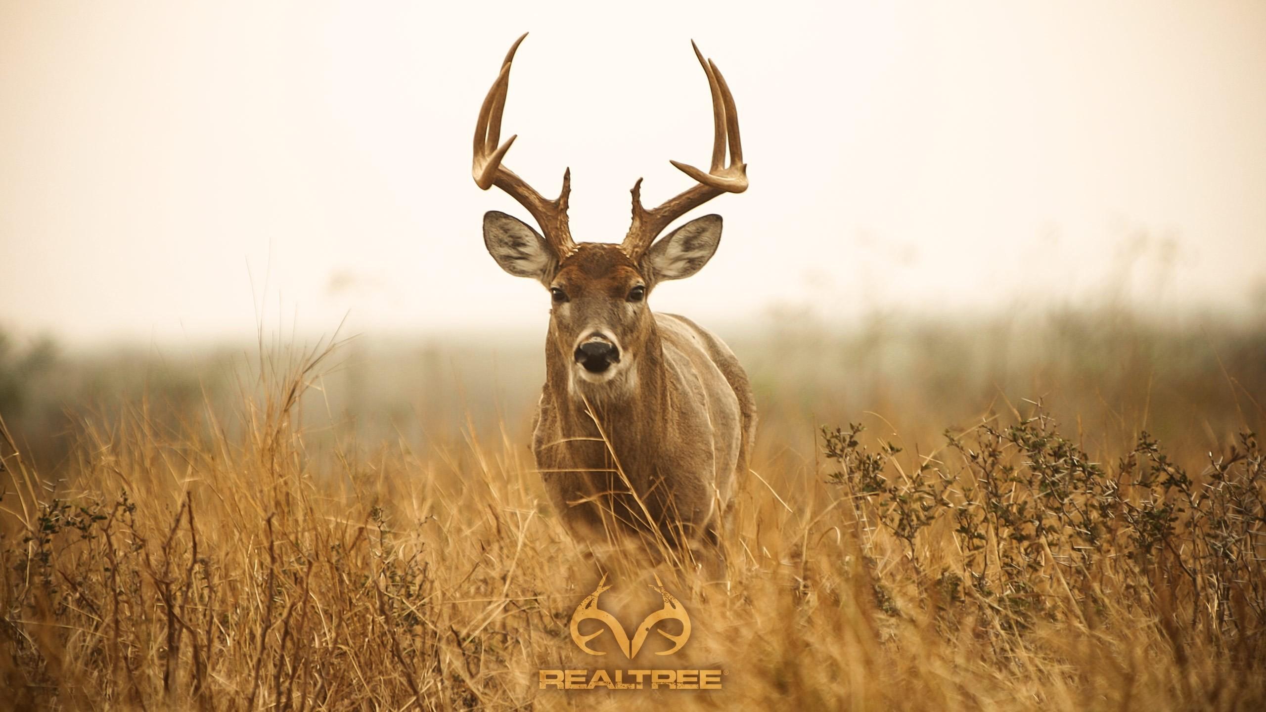 Similiar Deer Hunting Desktop Backgrounds Fall Keywords